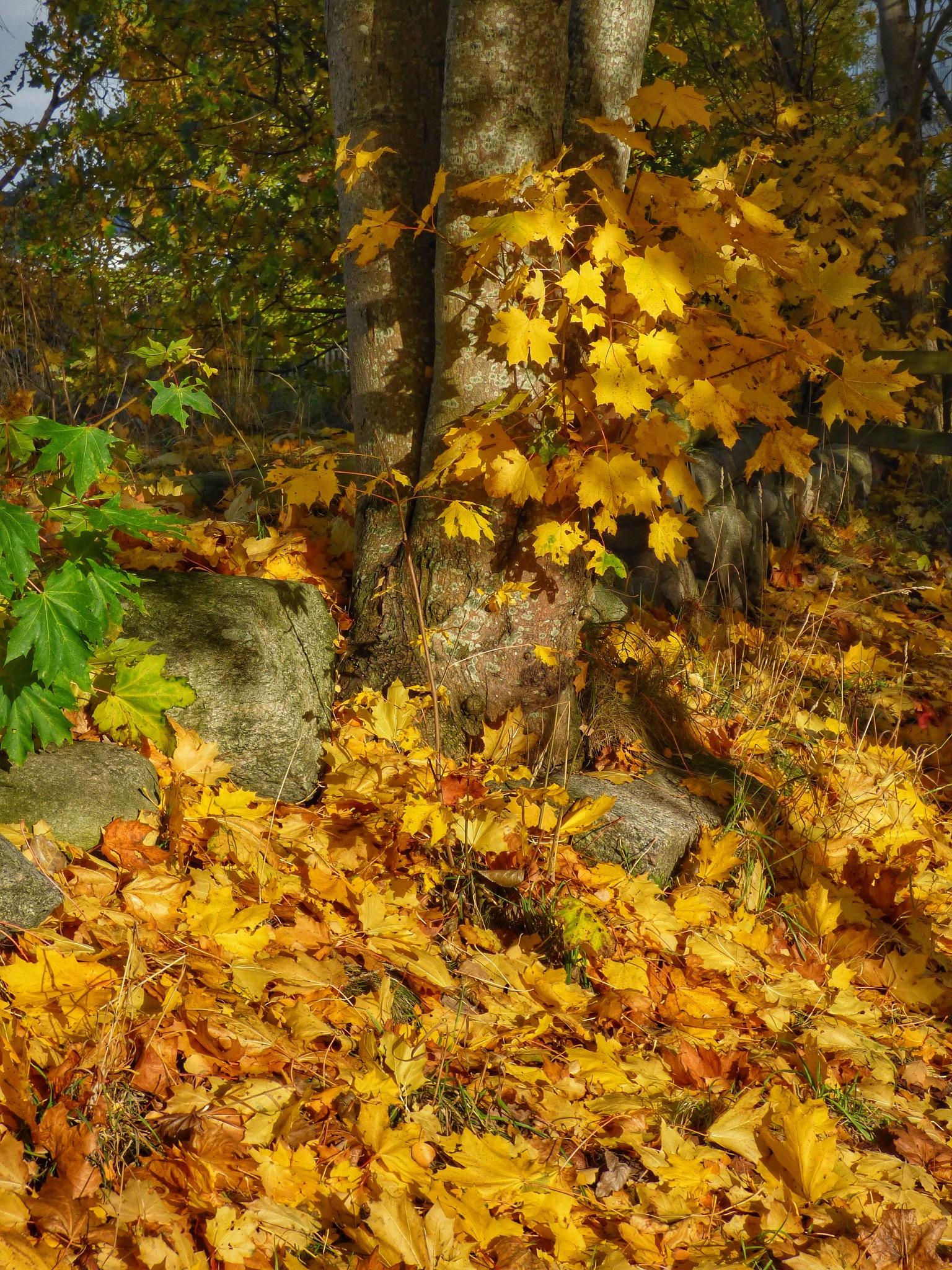 Autumnleaves by Helene Åvall