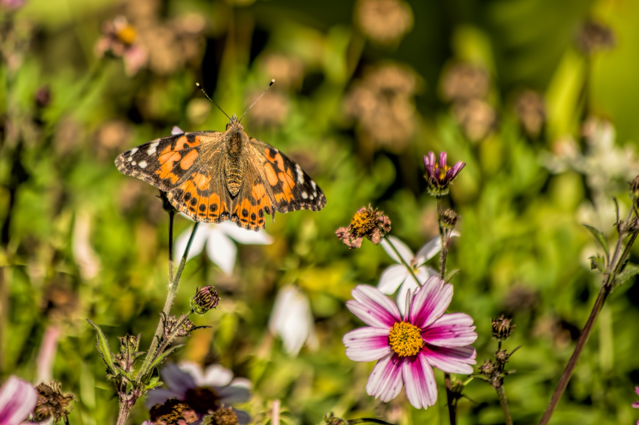 Butterfly in autumn by Micke Seise