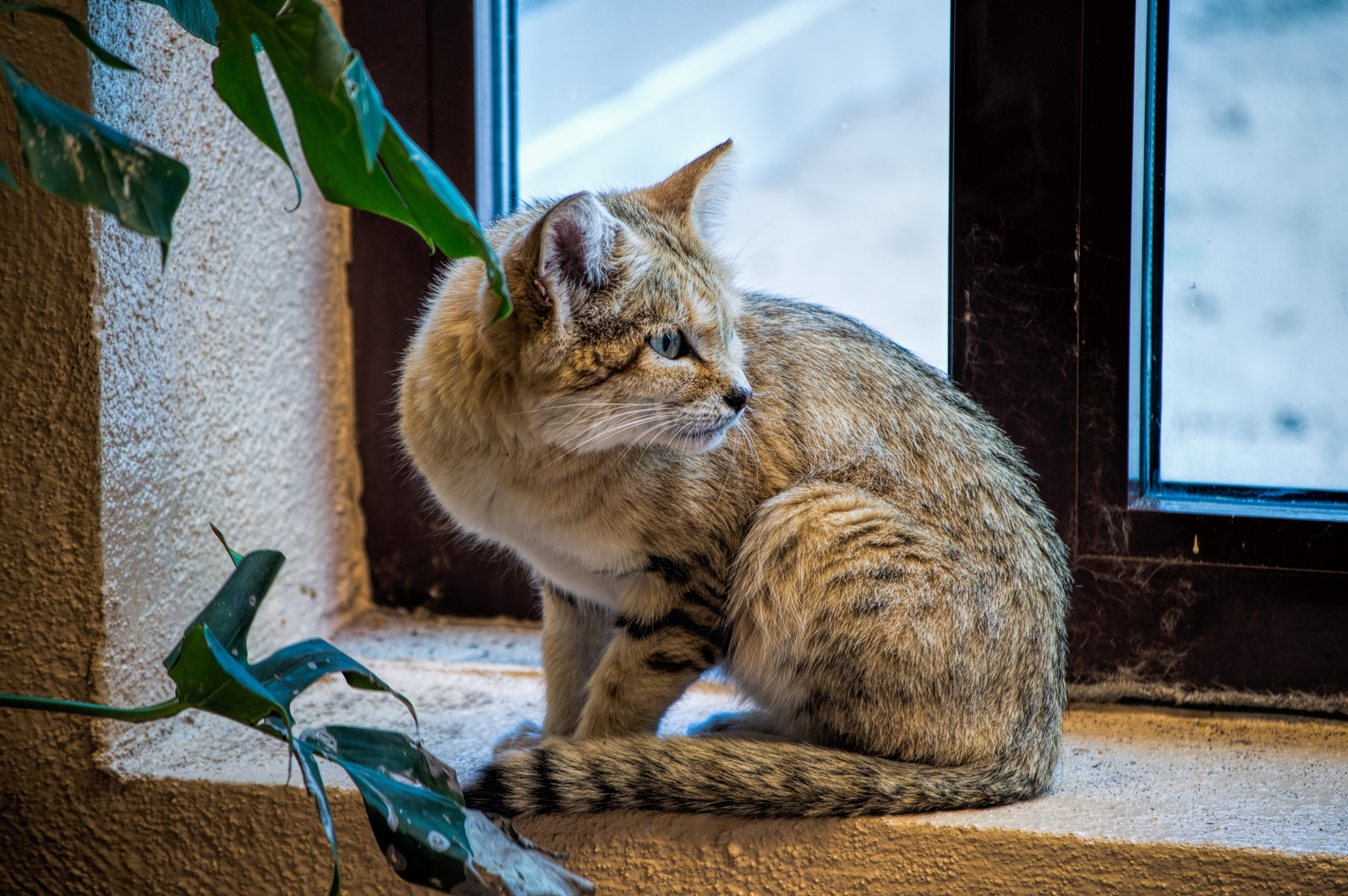 The sand cat by Micke Seise