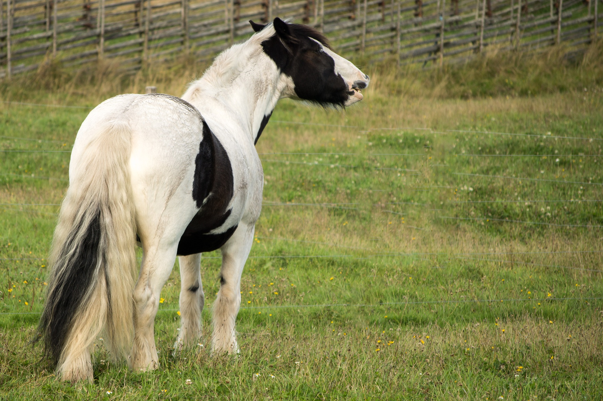 A horse by Micke Seise