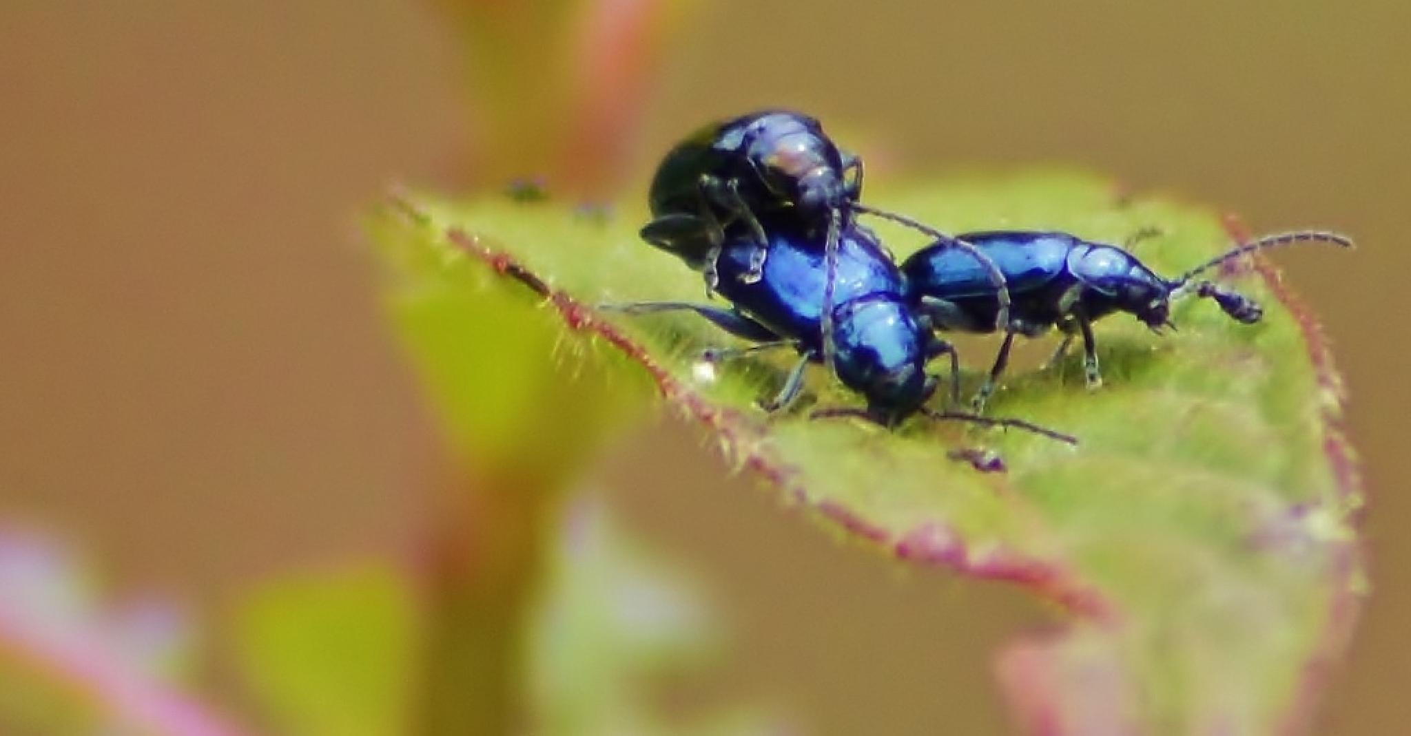Freaky Beetles by jamie.dorton