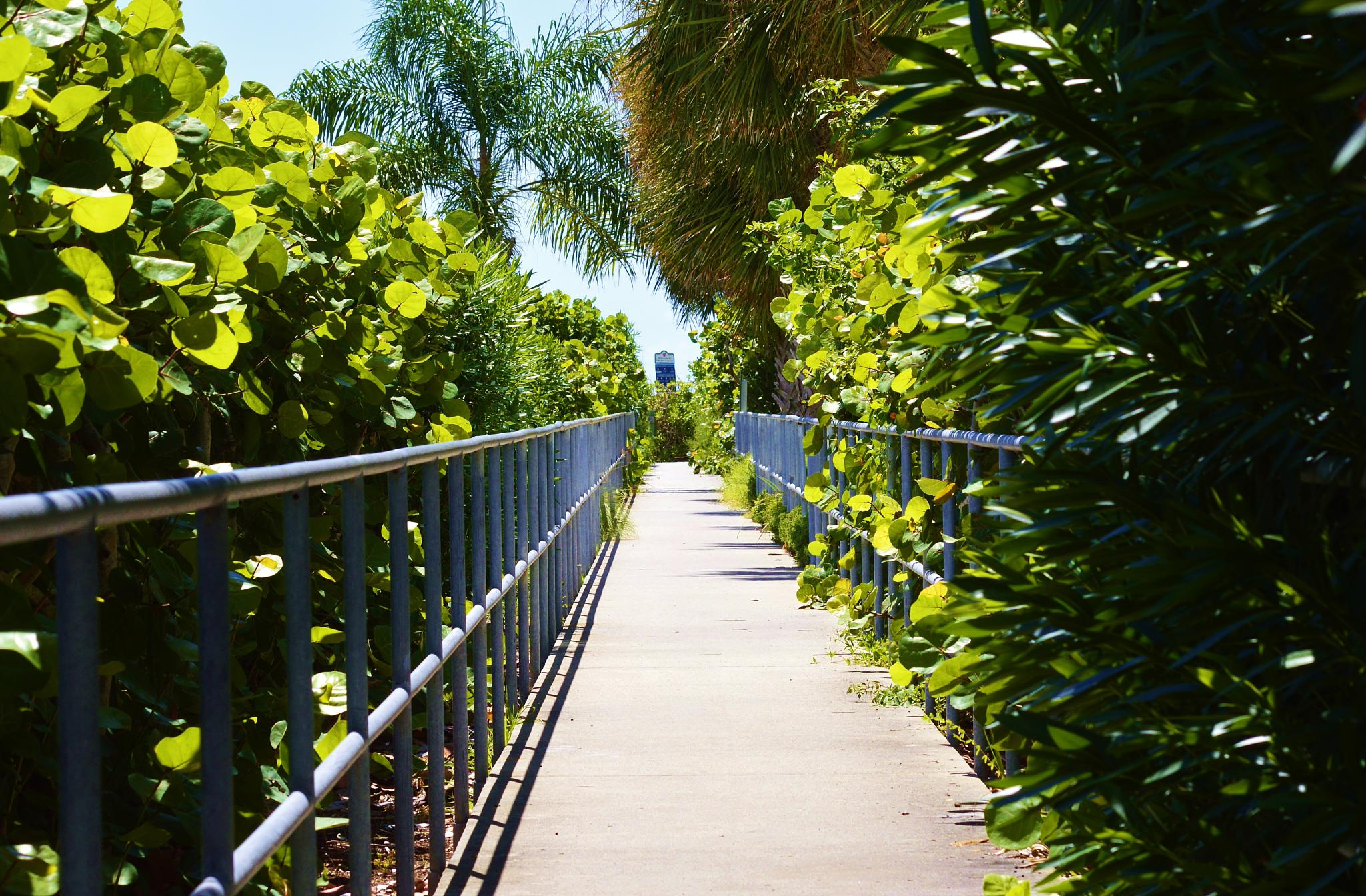 Acces Path to the Beach by jamie.dorton