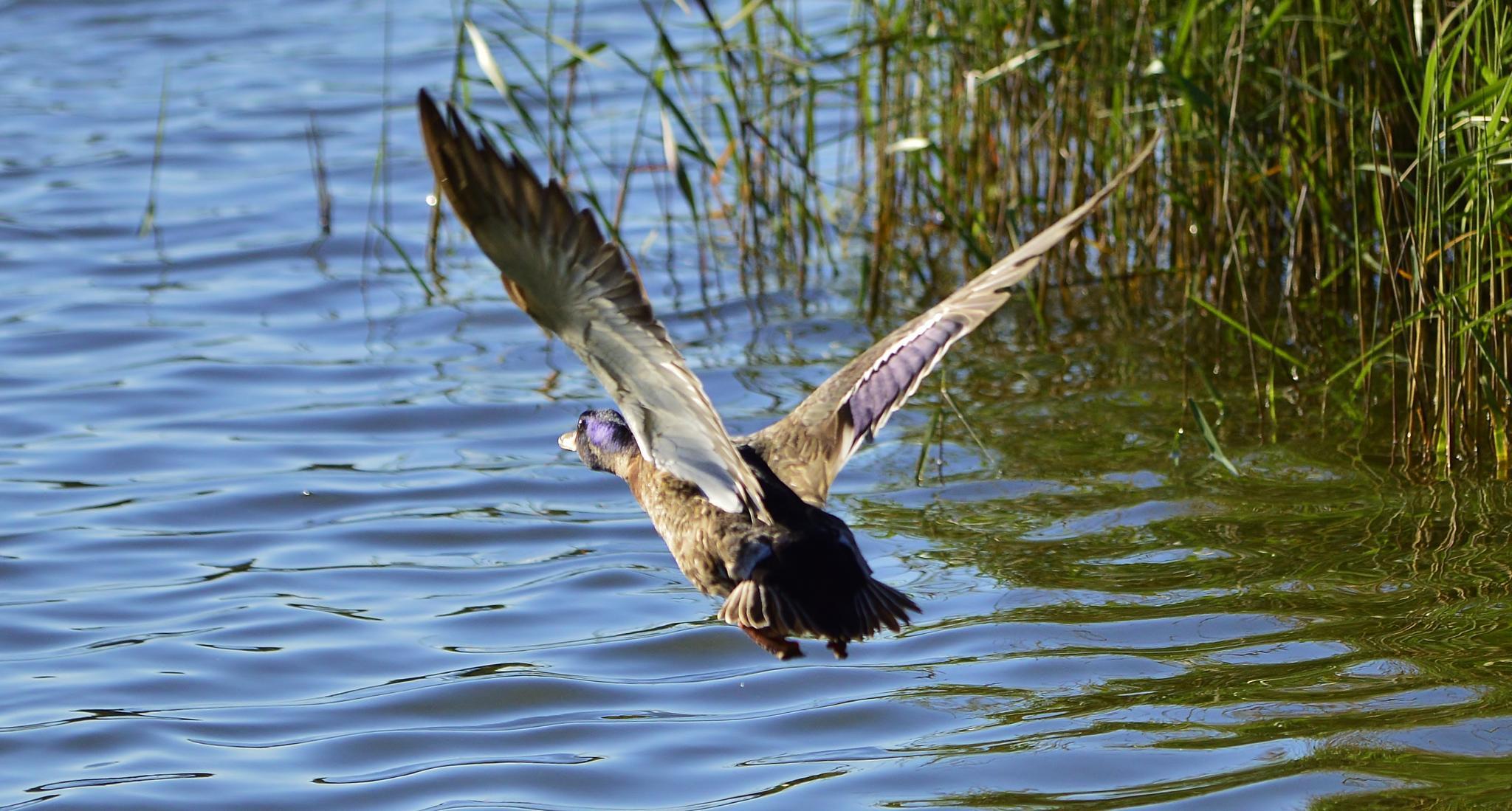 Flying Away! by jamie.dorton
