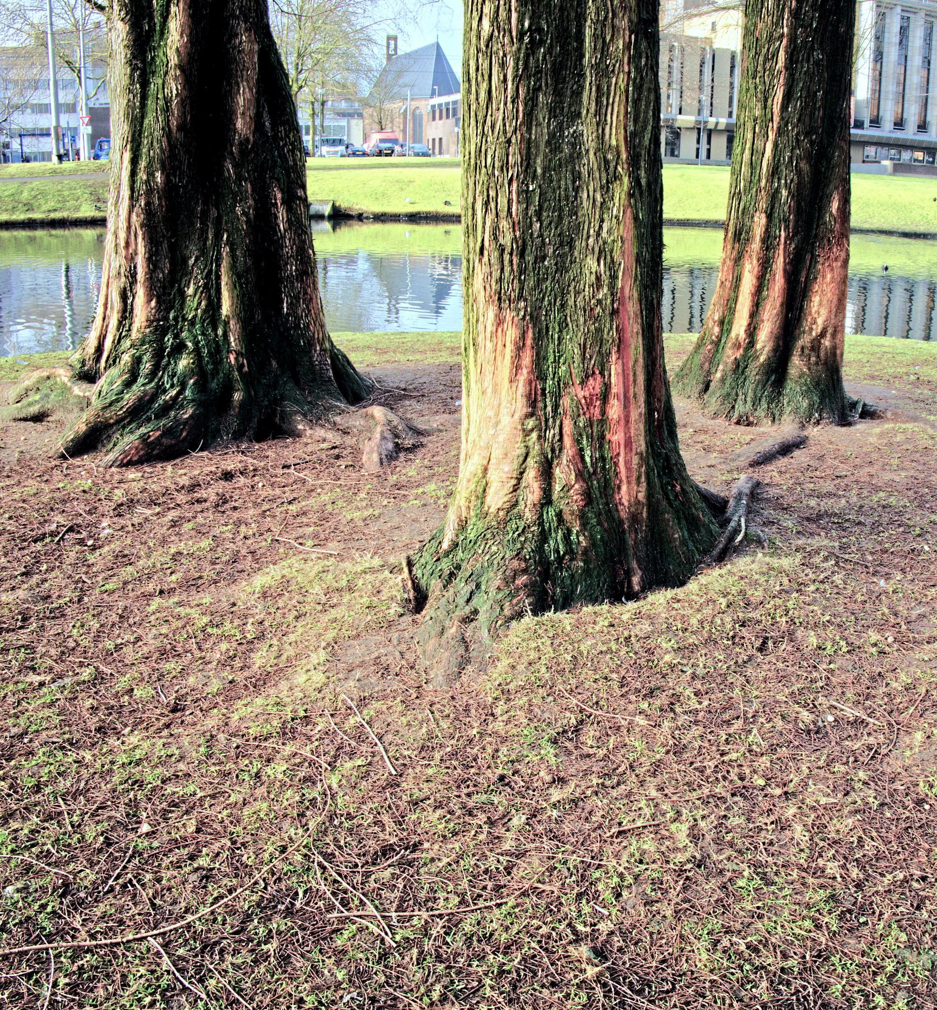 Trees by jos.vanooijen.92
