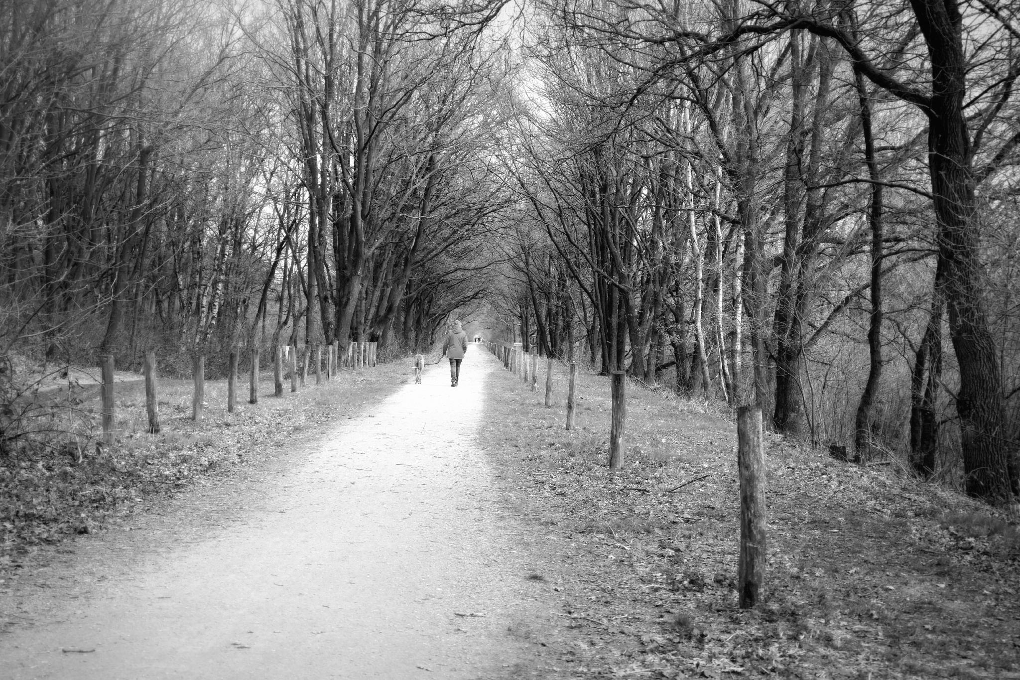 Walking the dog by jos.vanooijen.92