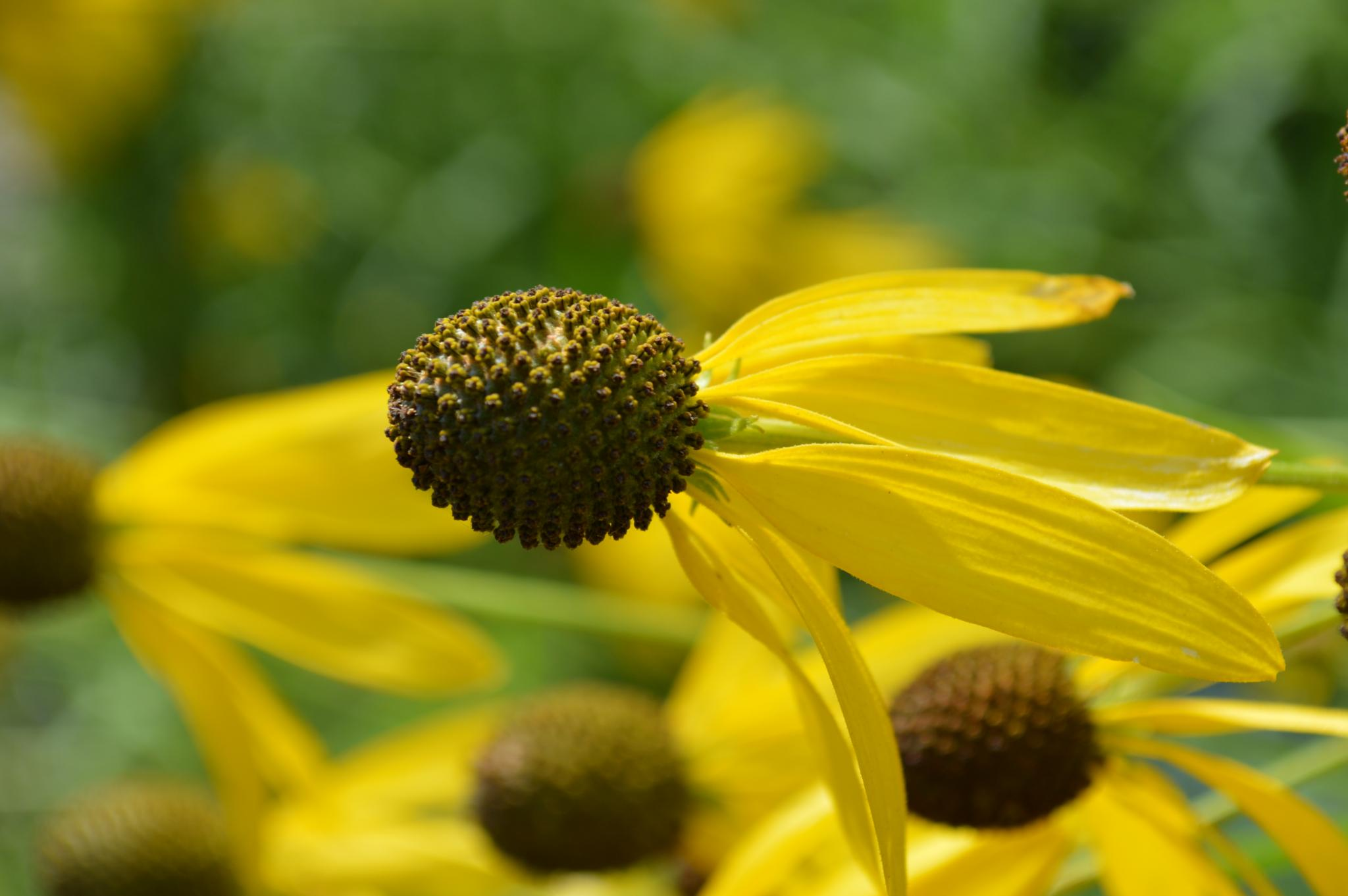 Missouri Botanical Garden by beth.bragawnettleton