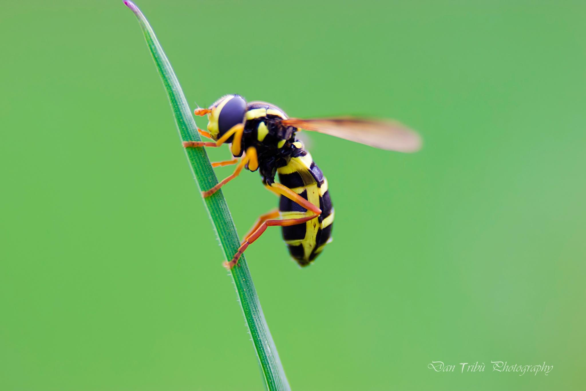 bugs by Dan Tribù