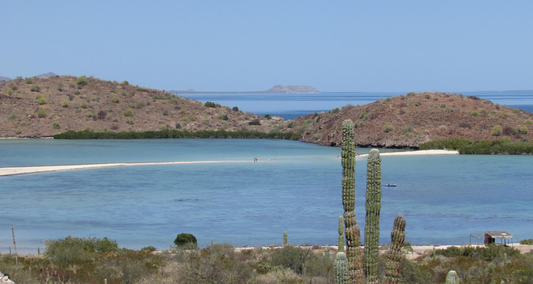Cactus to the Sea, near Mulege,  Baja California Sur, Mexico by Lisa Marshall Moore