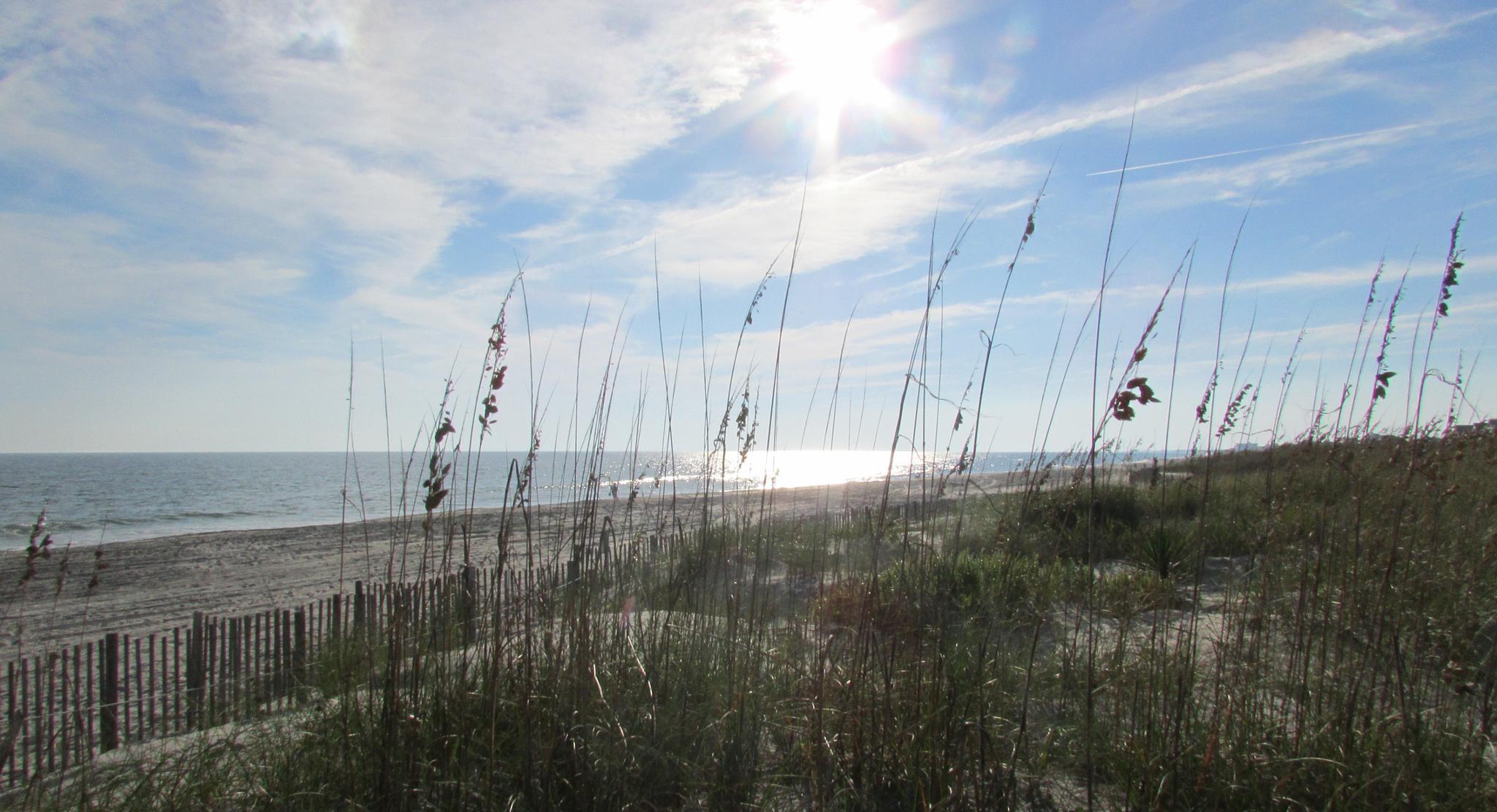 On the Dunes at Atlantic Beach, North Carolina by Lisa Marshall Moore