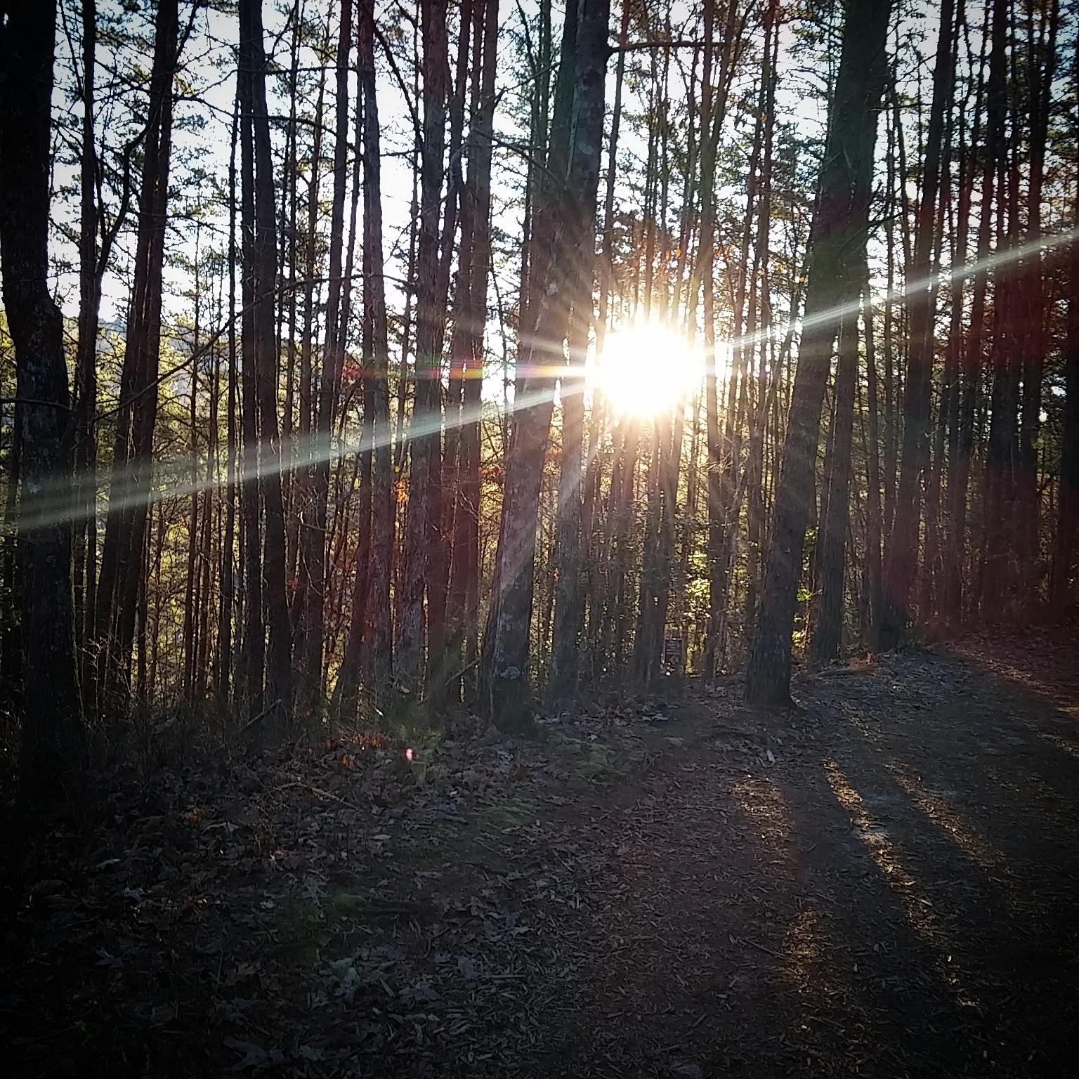 Sun burst by Marcy Cox