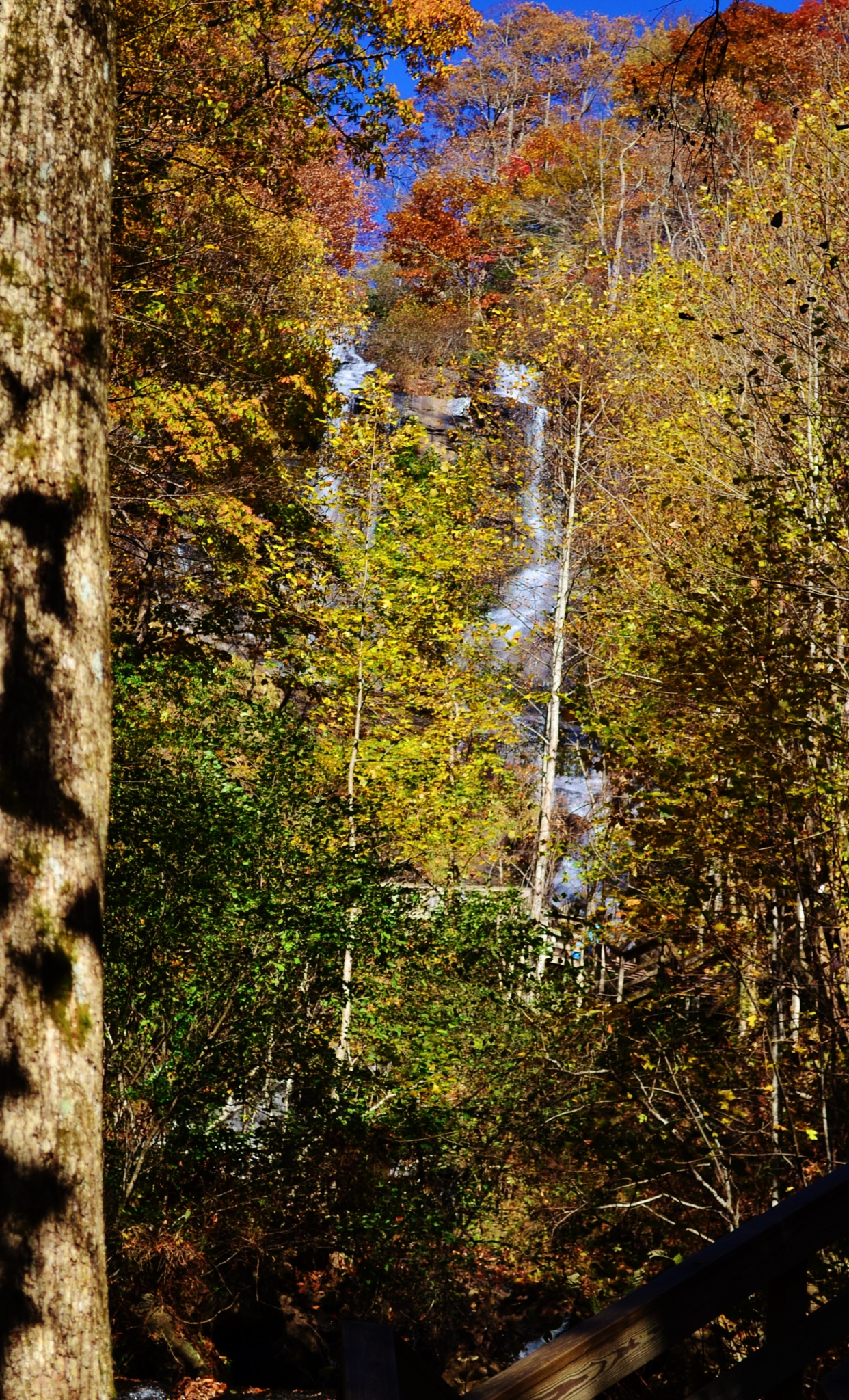 Autumn leaves and Amicalola Falls by Marcy Cox