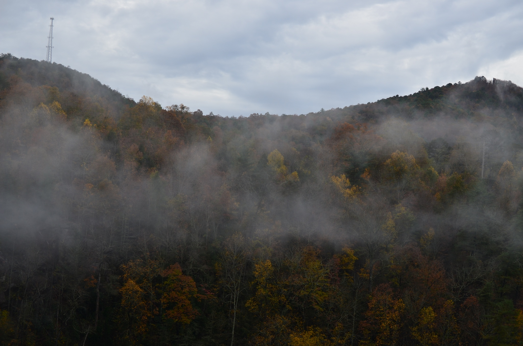 Fog in the mountains by Marcy Cox