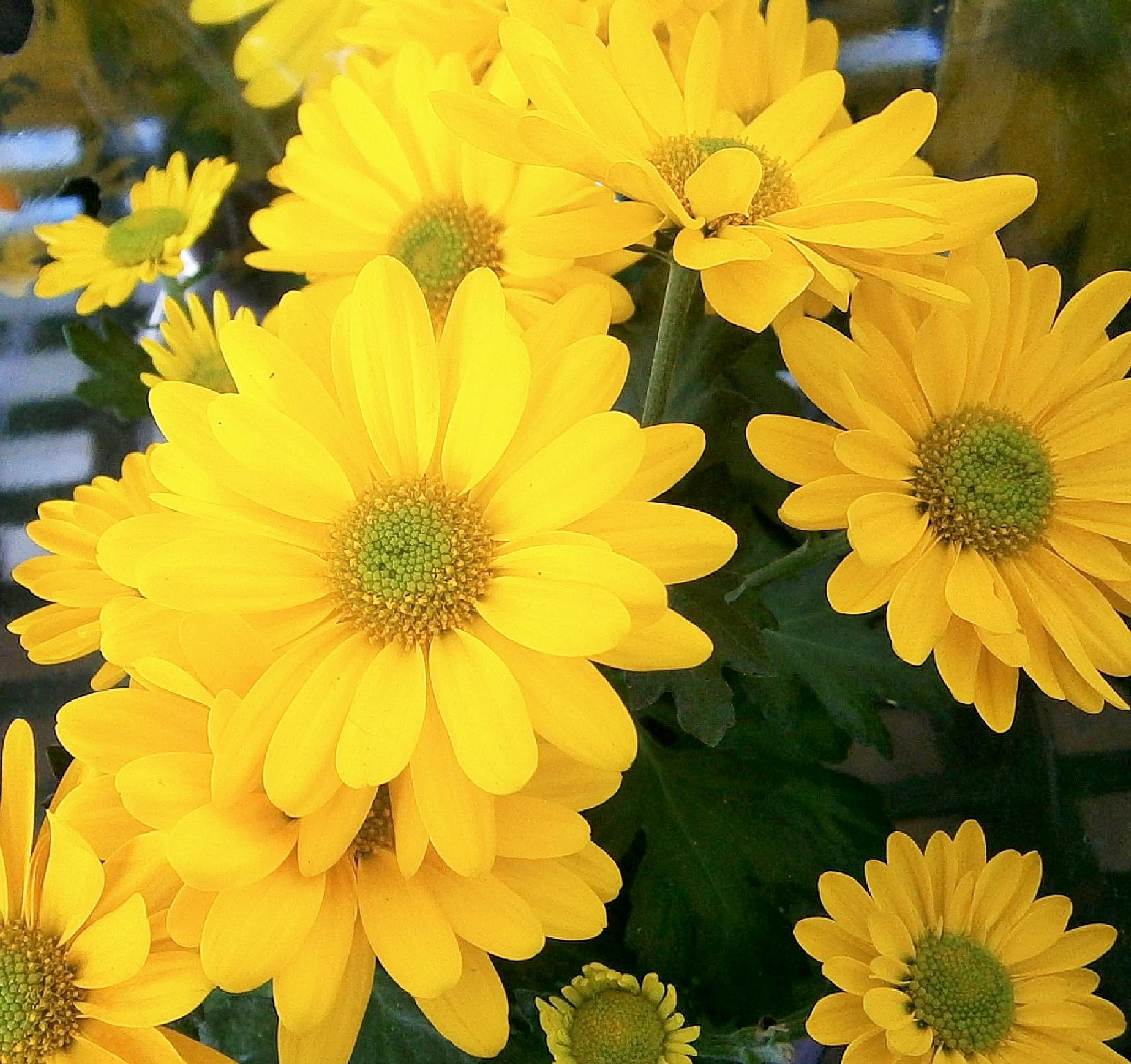 yellow by robin.lieberman.7