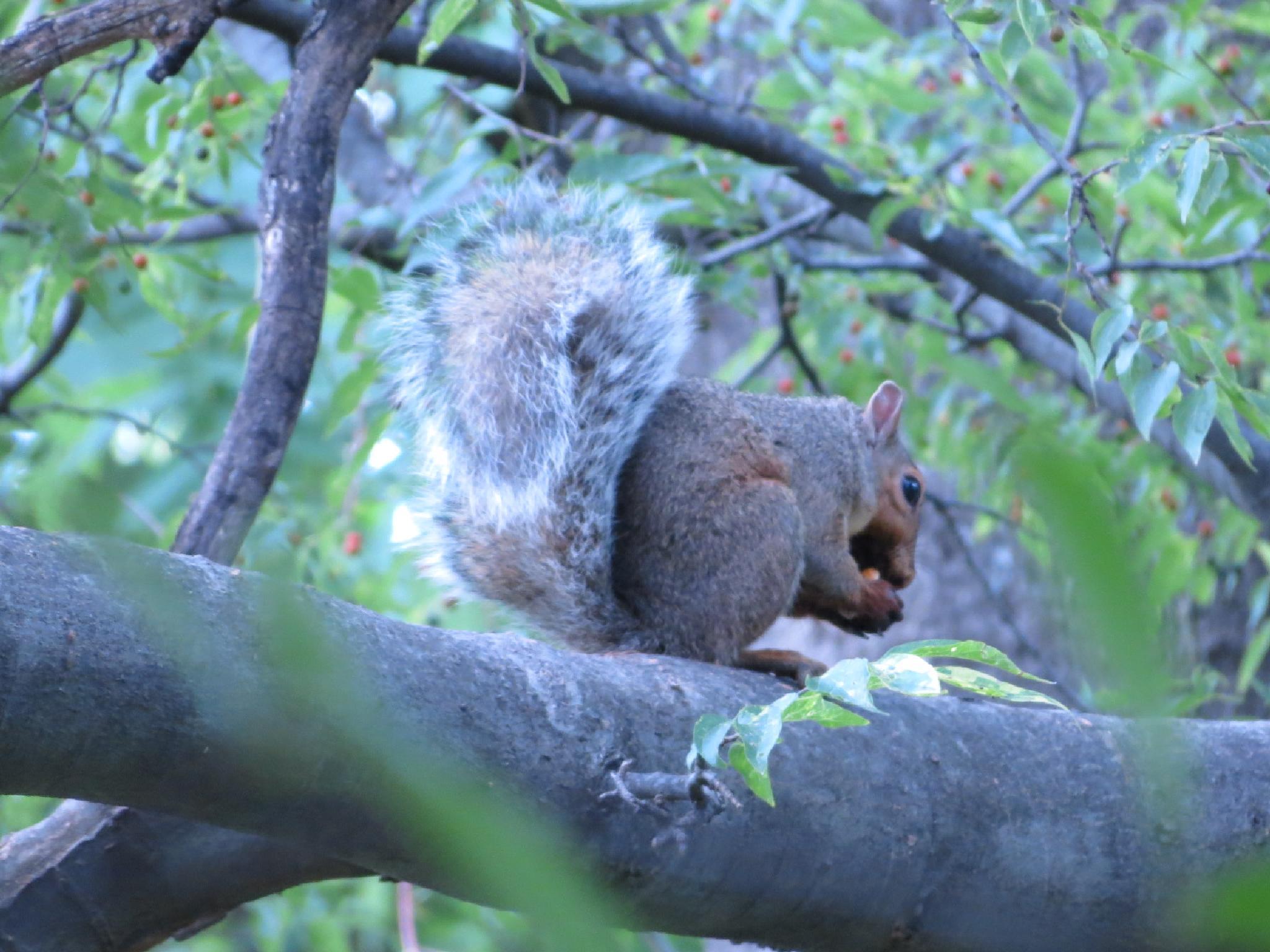 Squirrel! by pauline.burden.60