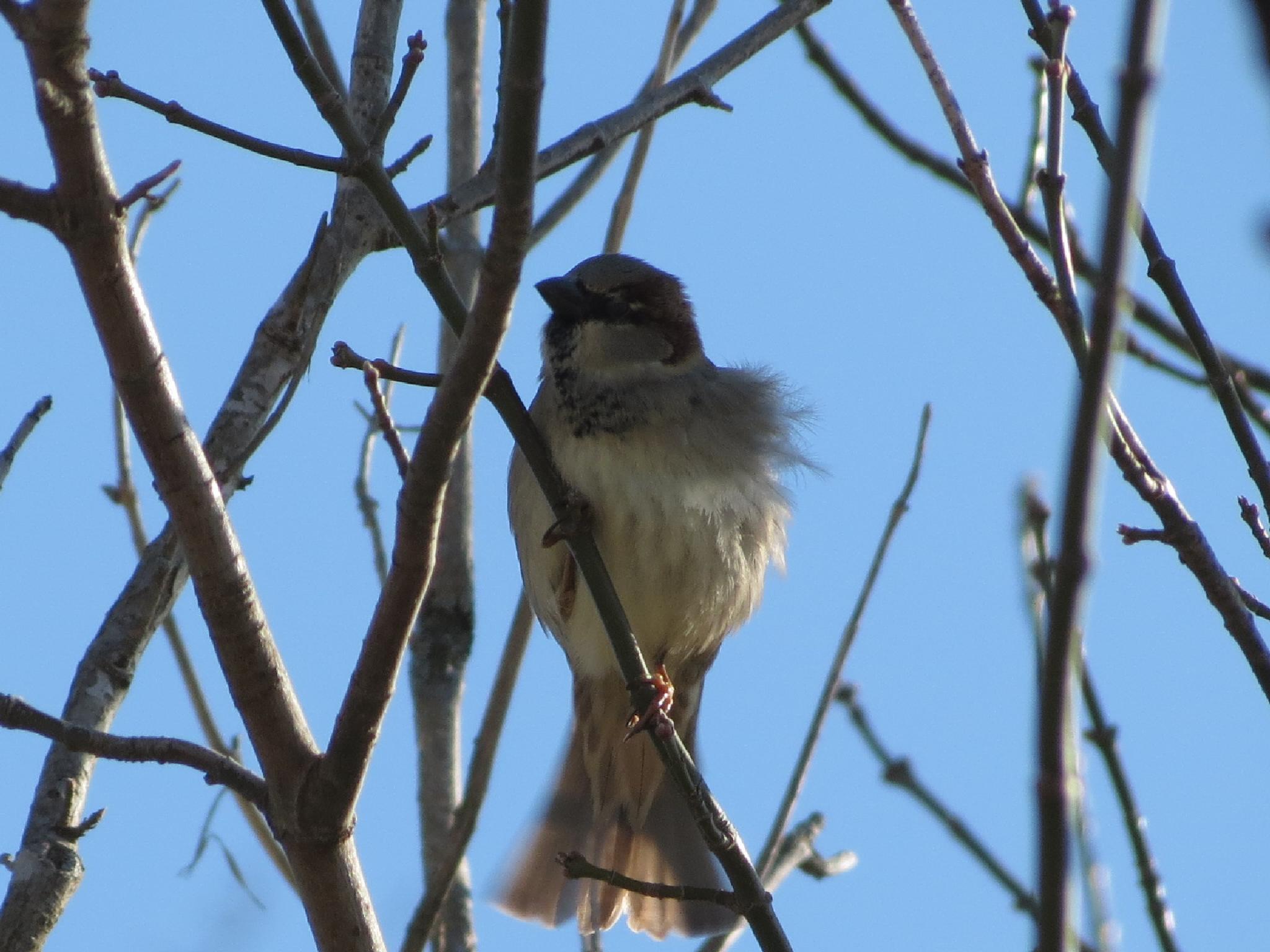 Sparrow enjoys the Breeze by pauline.burden.60