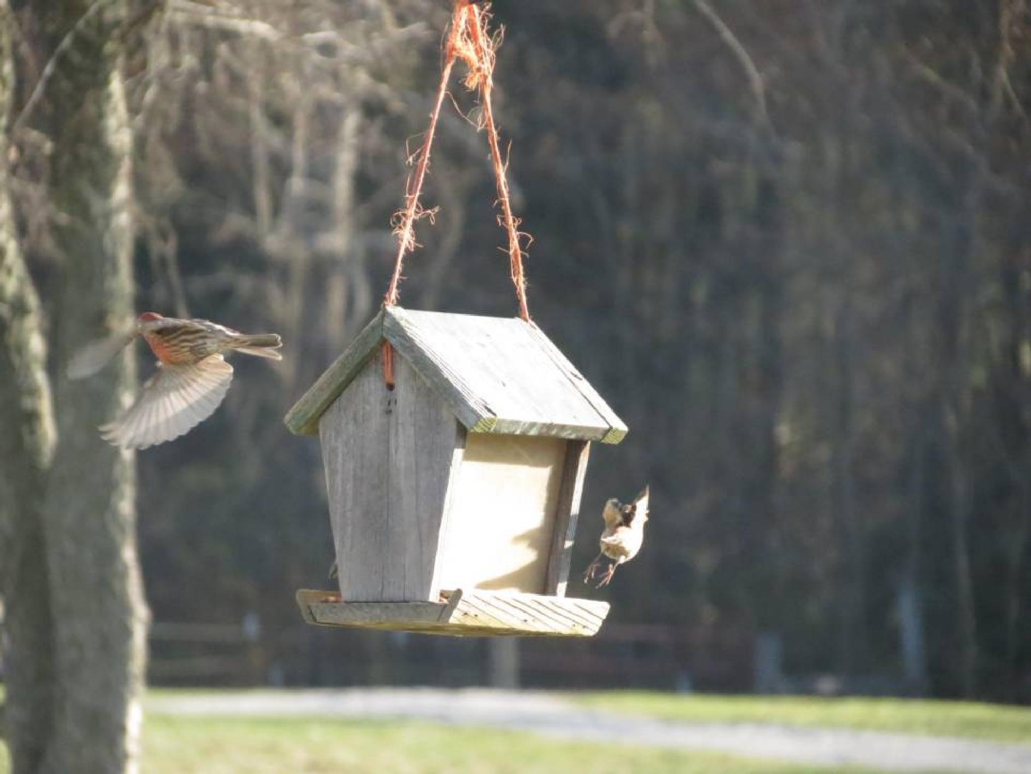 Finch Retreat by pauline.burden.60