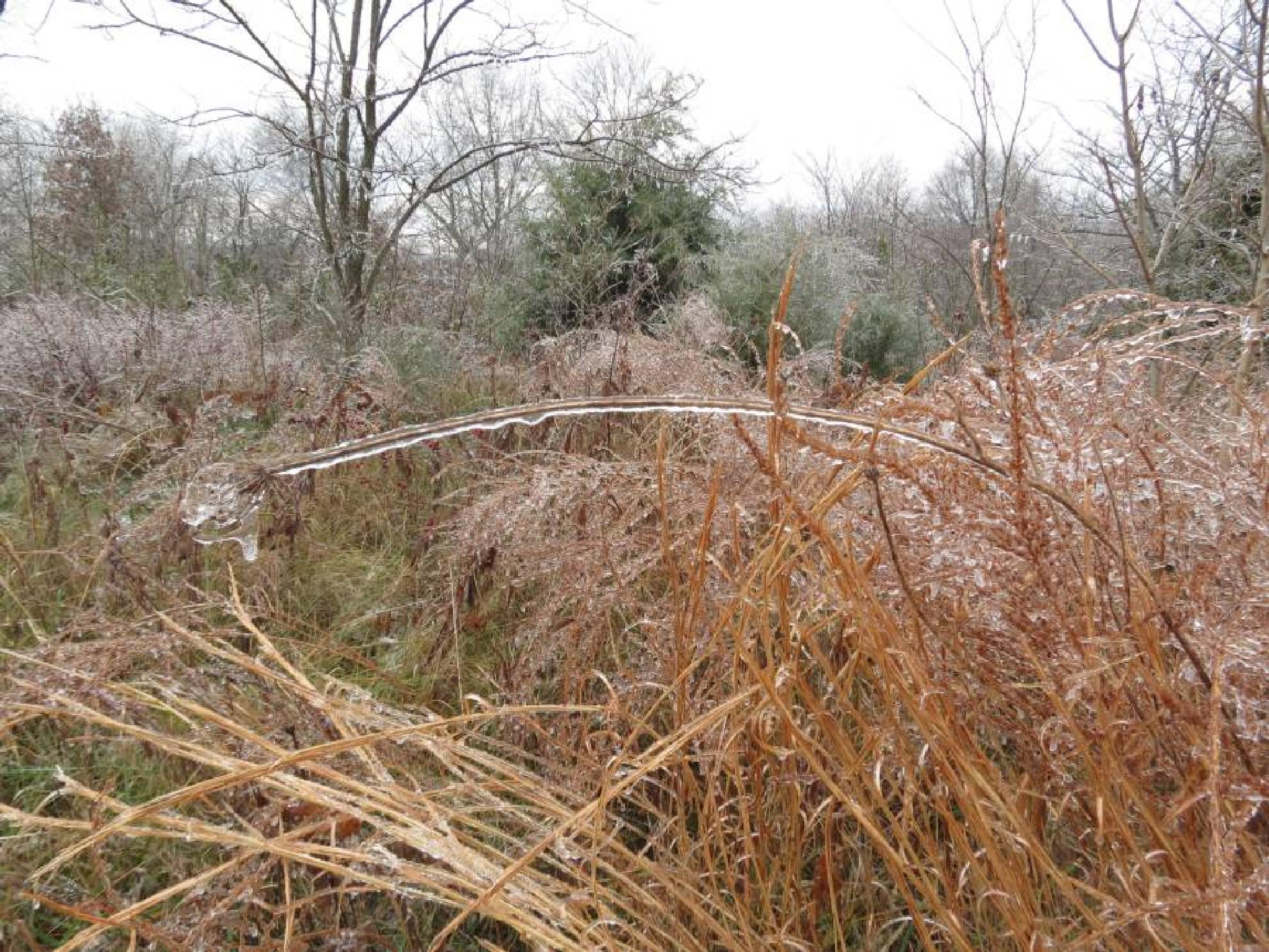 Icy Grasp by pauline.burden.60