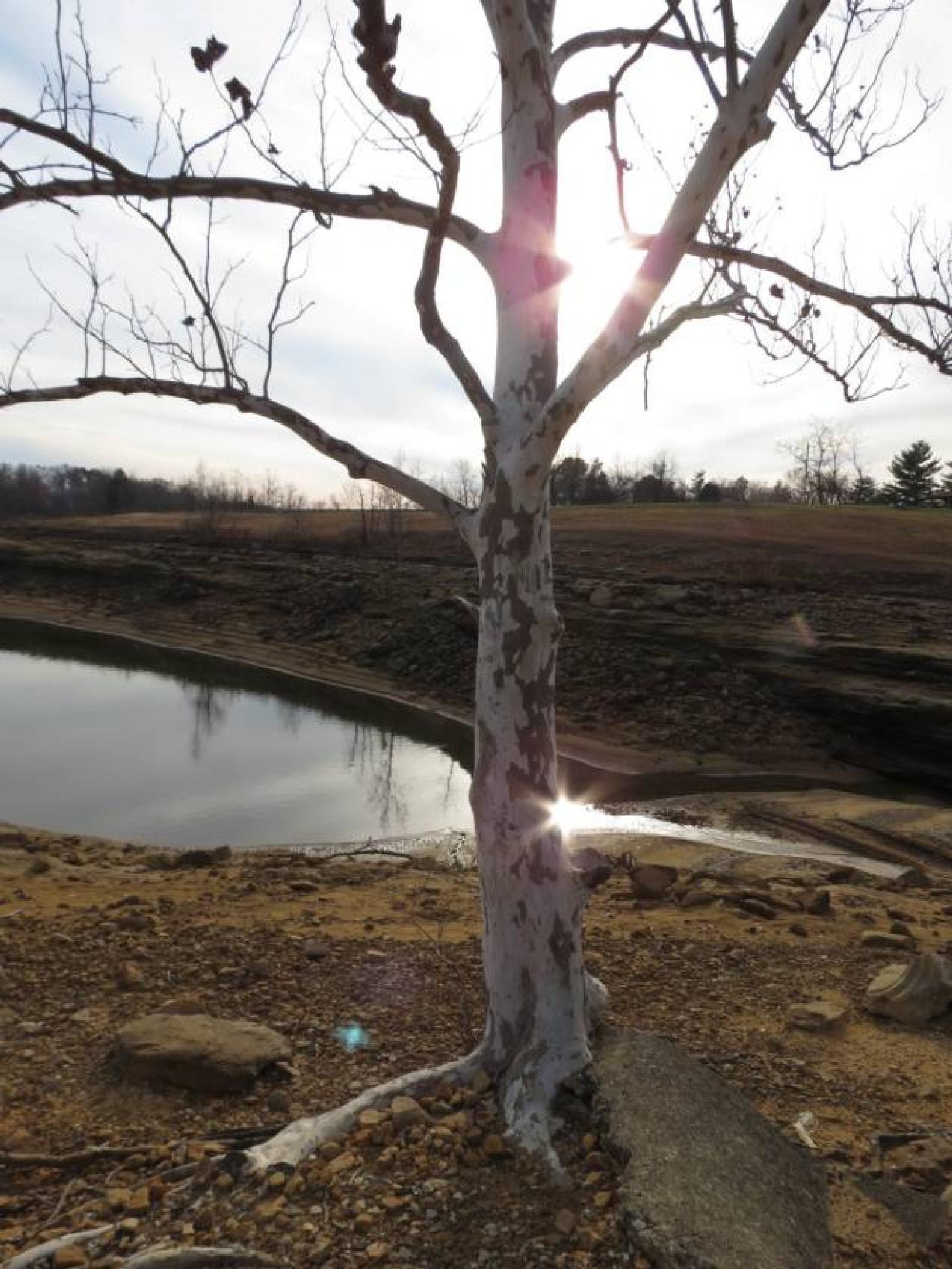 Lone Tree by pauline.burden.60