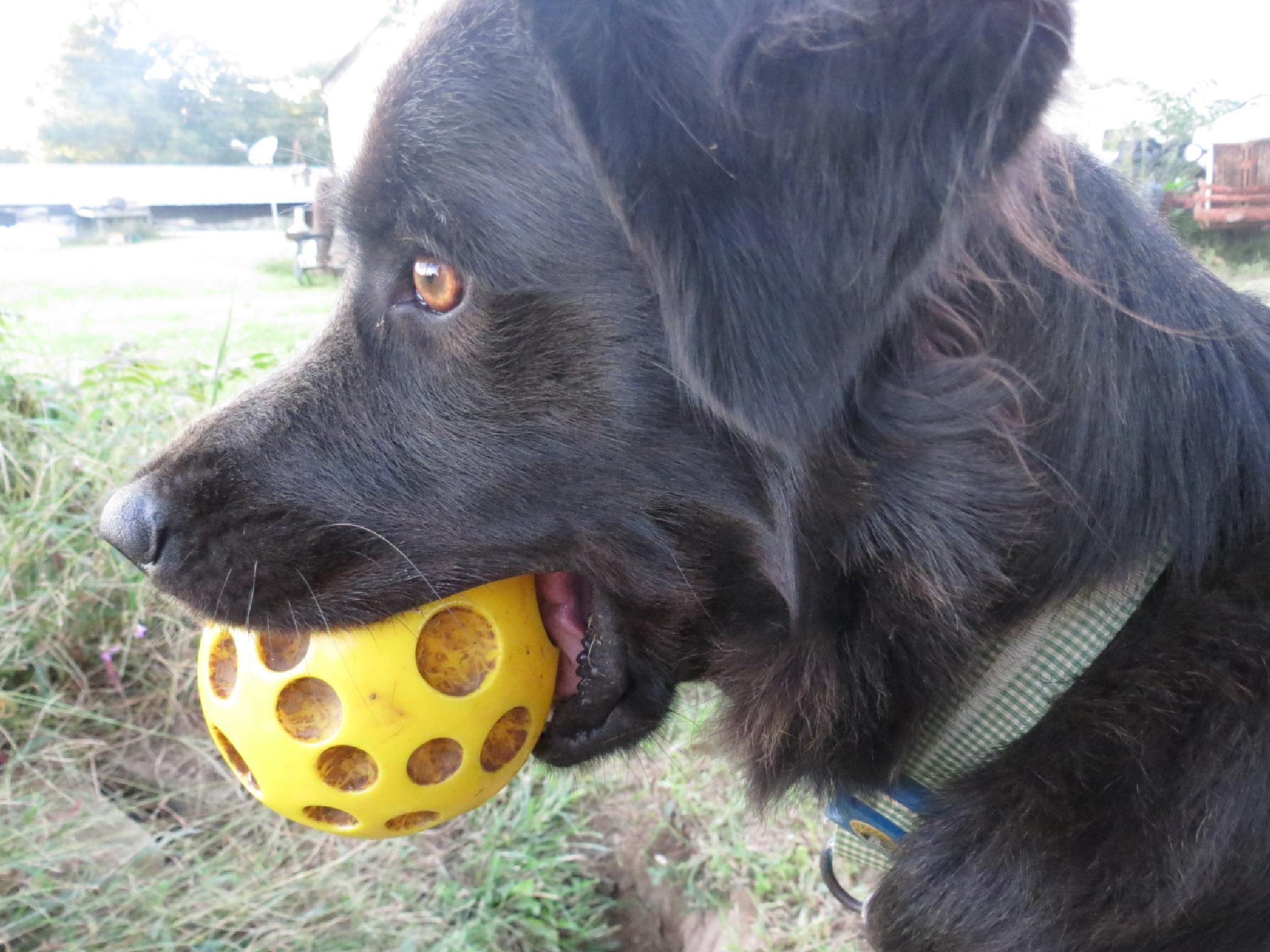 """'Olive' wants to """"play ball""""! by pauline.burden.60"""
