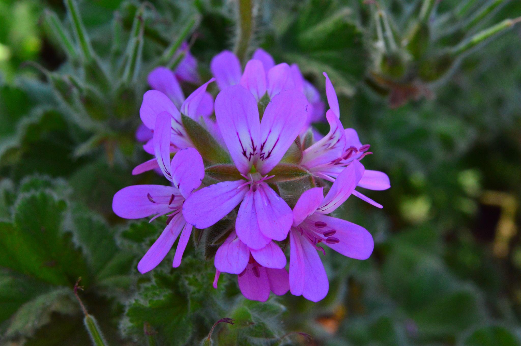 Purple Flowers by YF