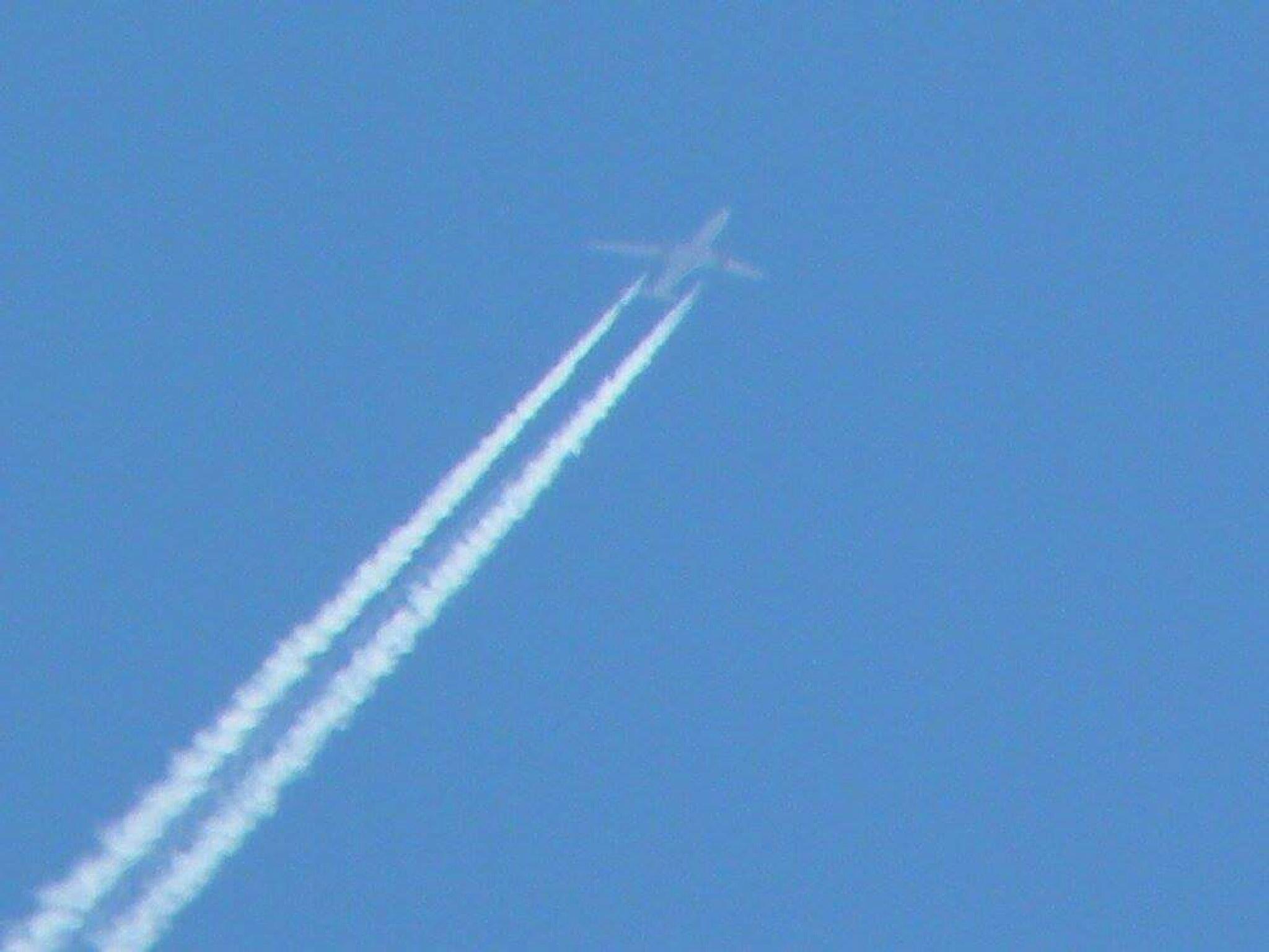 Flying High by Bern