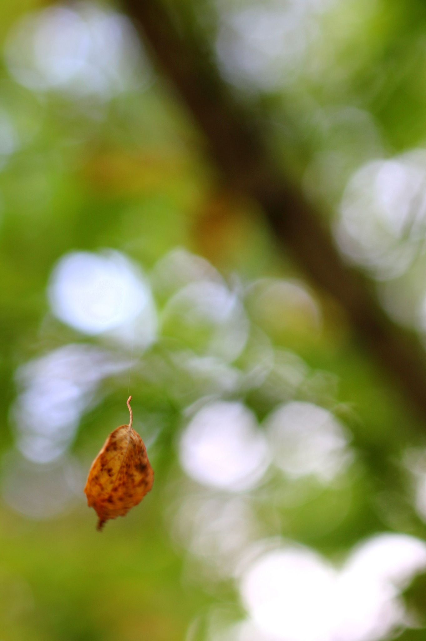 Floating leaf  by hannes.lindblom.7