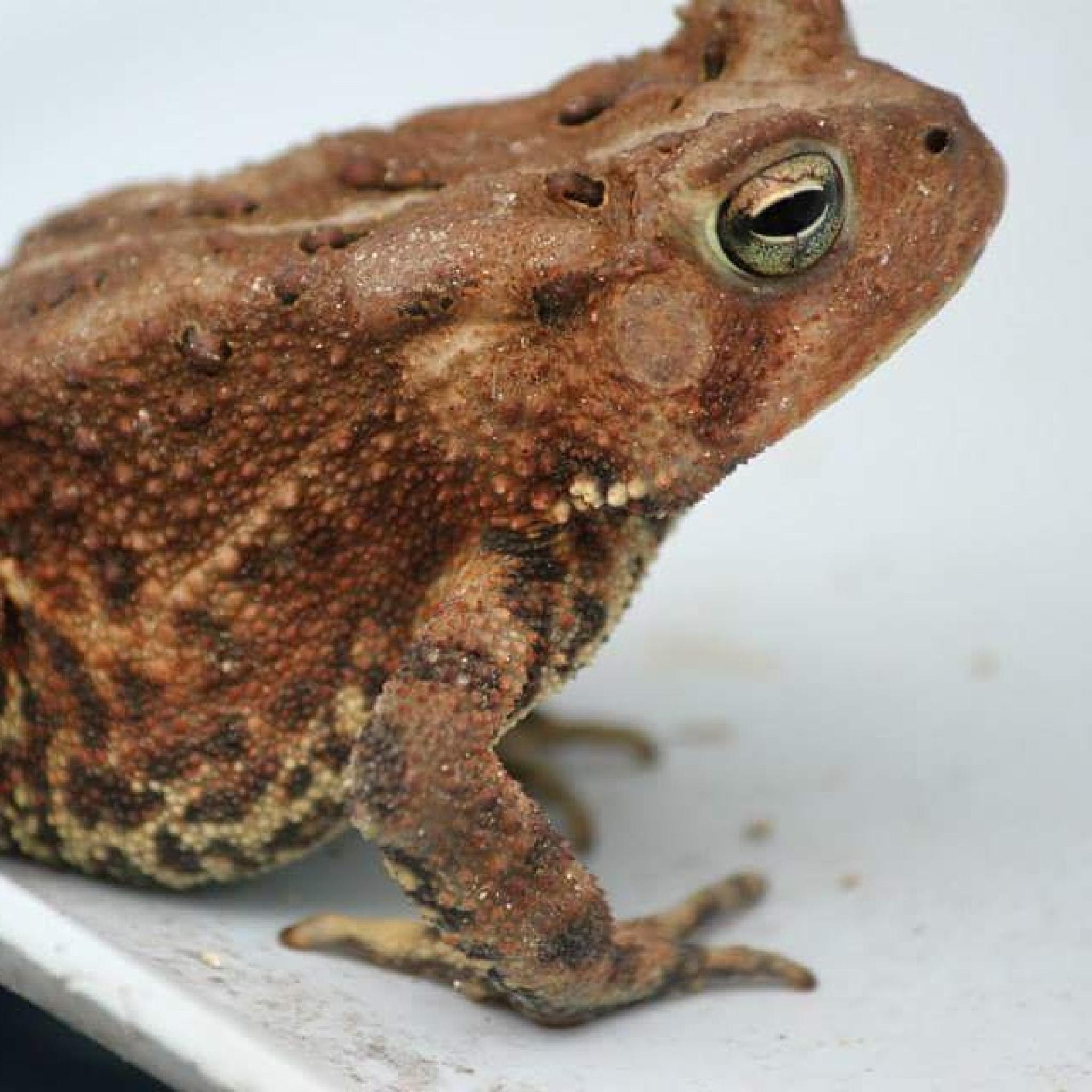 Toad by kimberly.sterling.351