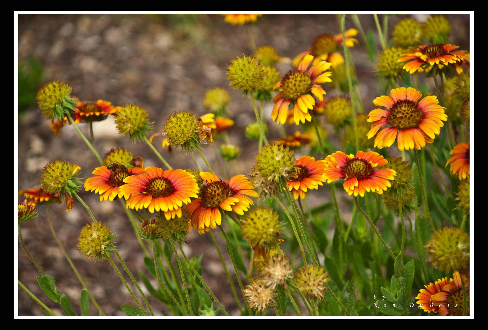 Summer Flowers by RonDuBois