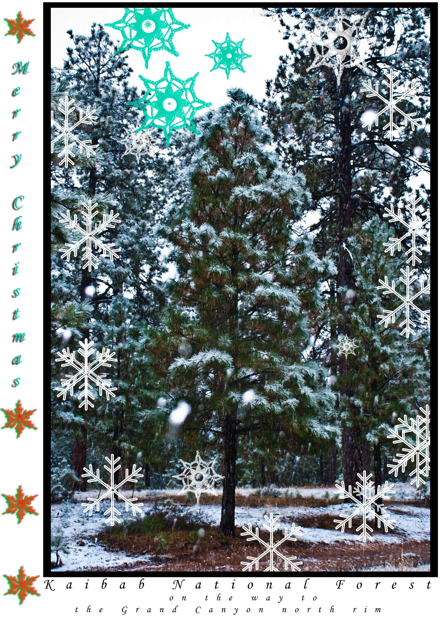MERRY CHRISTMAS YOUPIC by RonDuBois