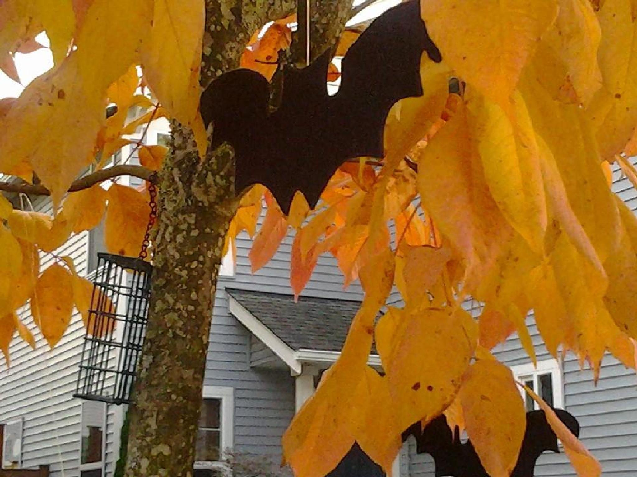 October by kathy.watkins.52