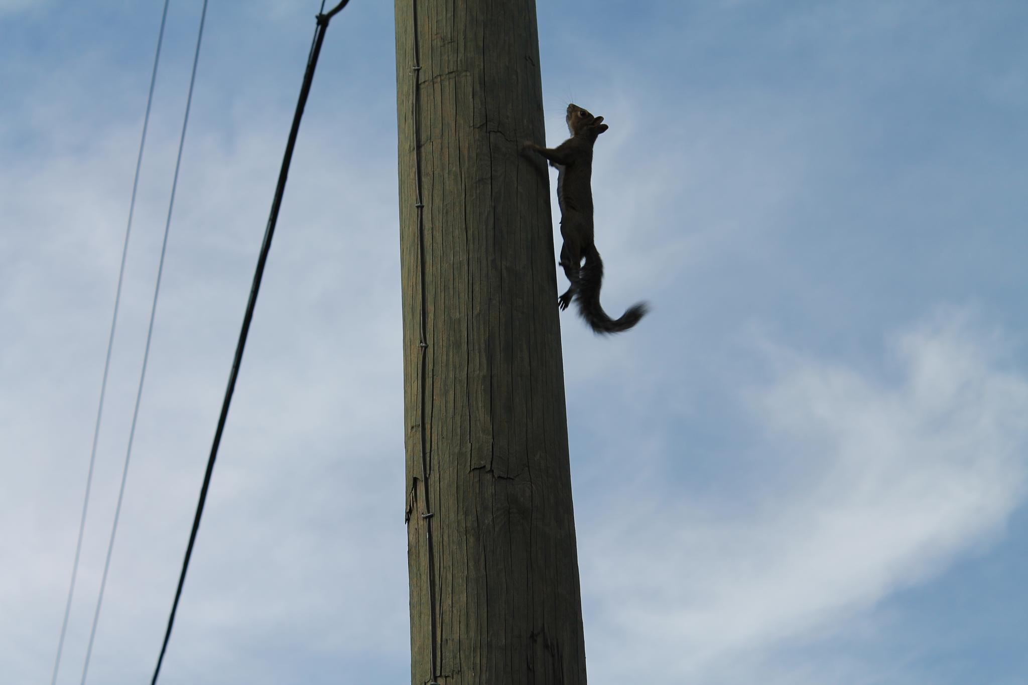 going up the pole by Kathy