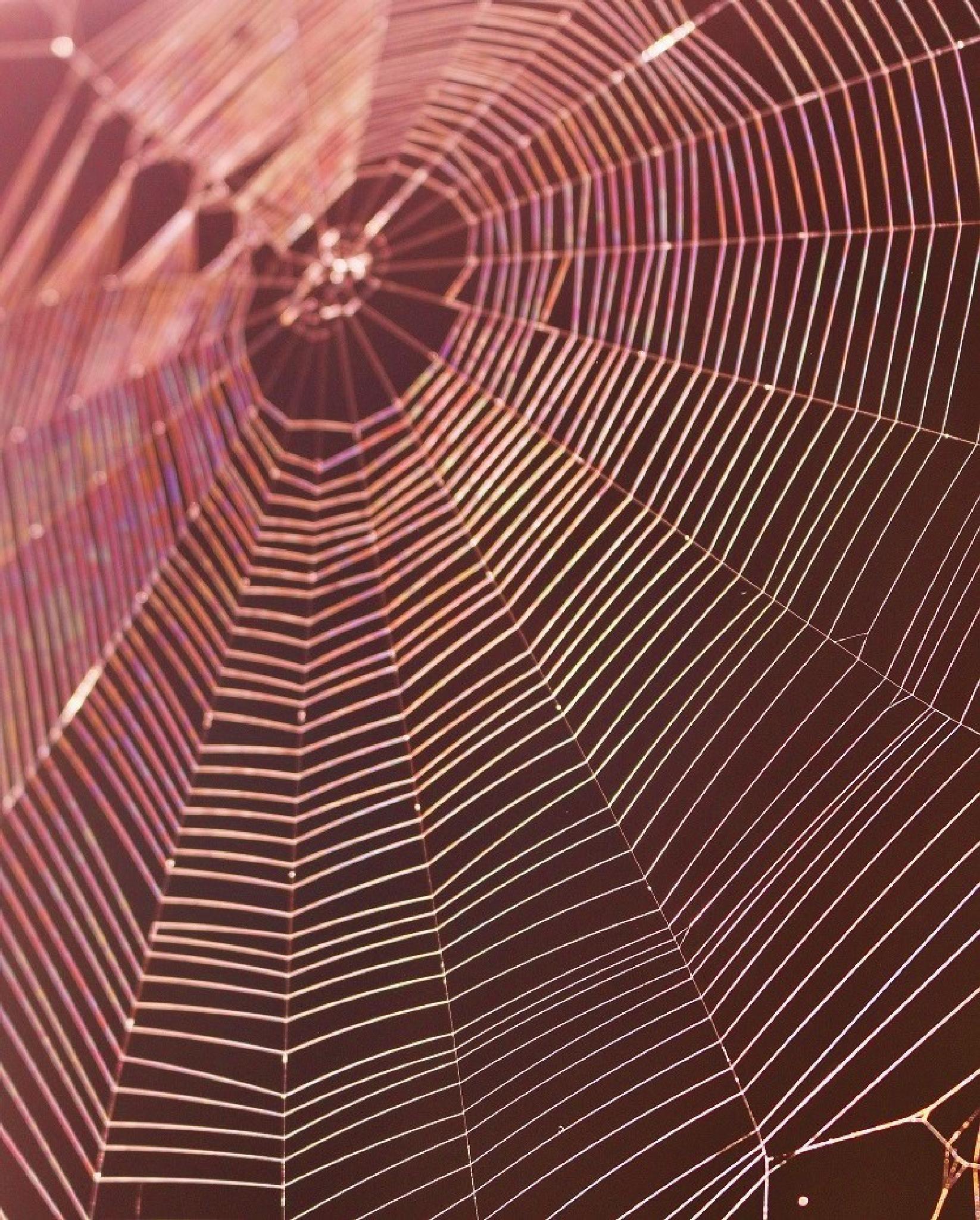 Spiderweb by wanda.nelson.562