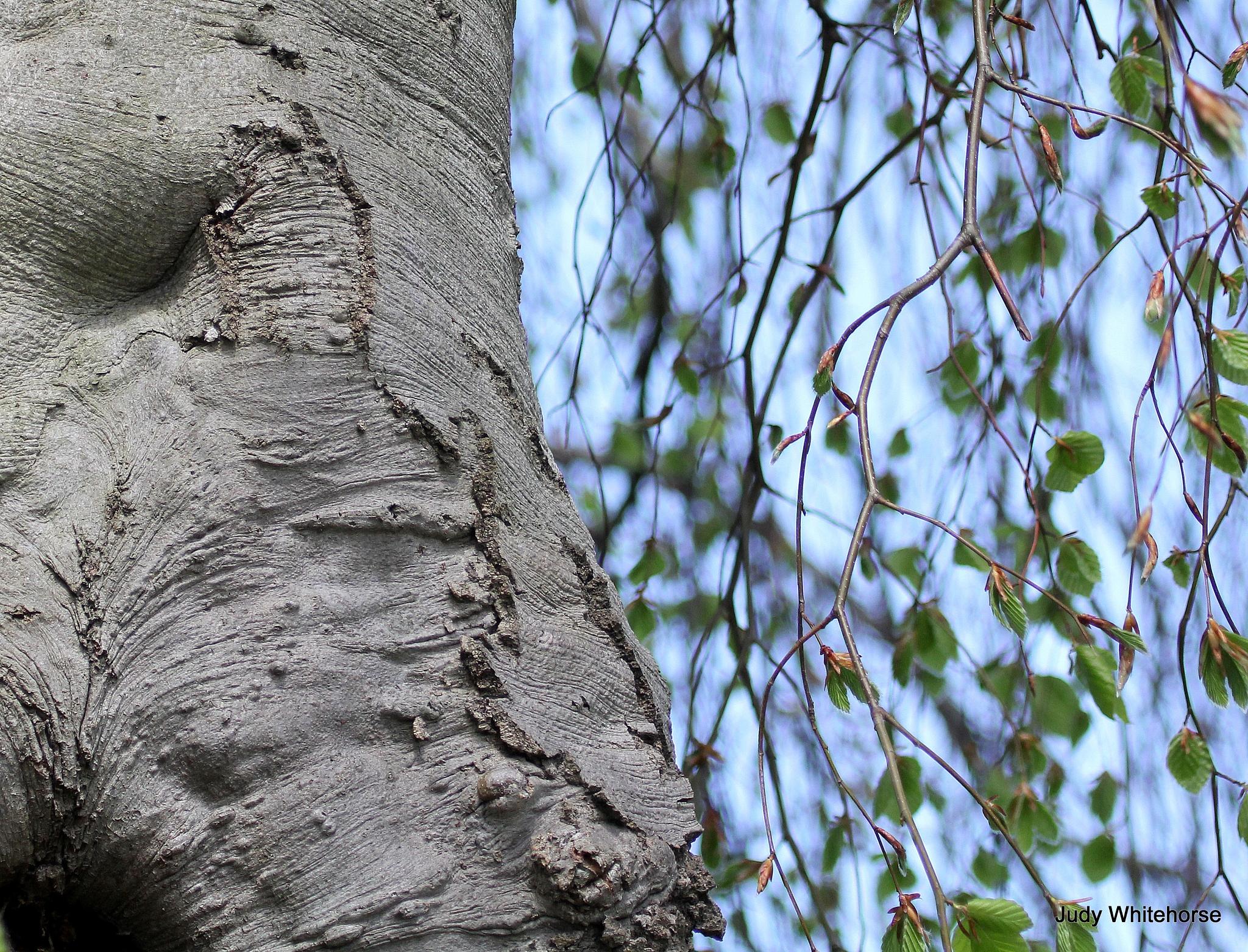 Sleeping Wood Creature by tarotdog