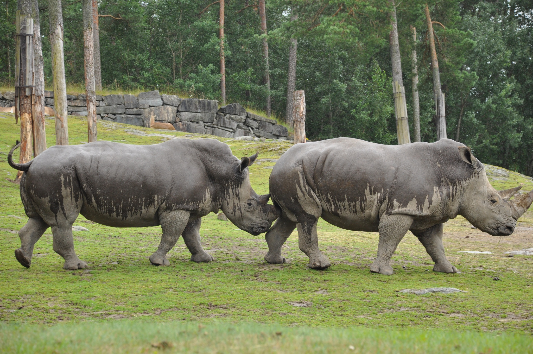 Photo in Animal #rhinoceros #friends #nikon #d90 #zoo