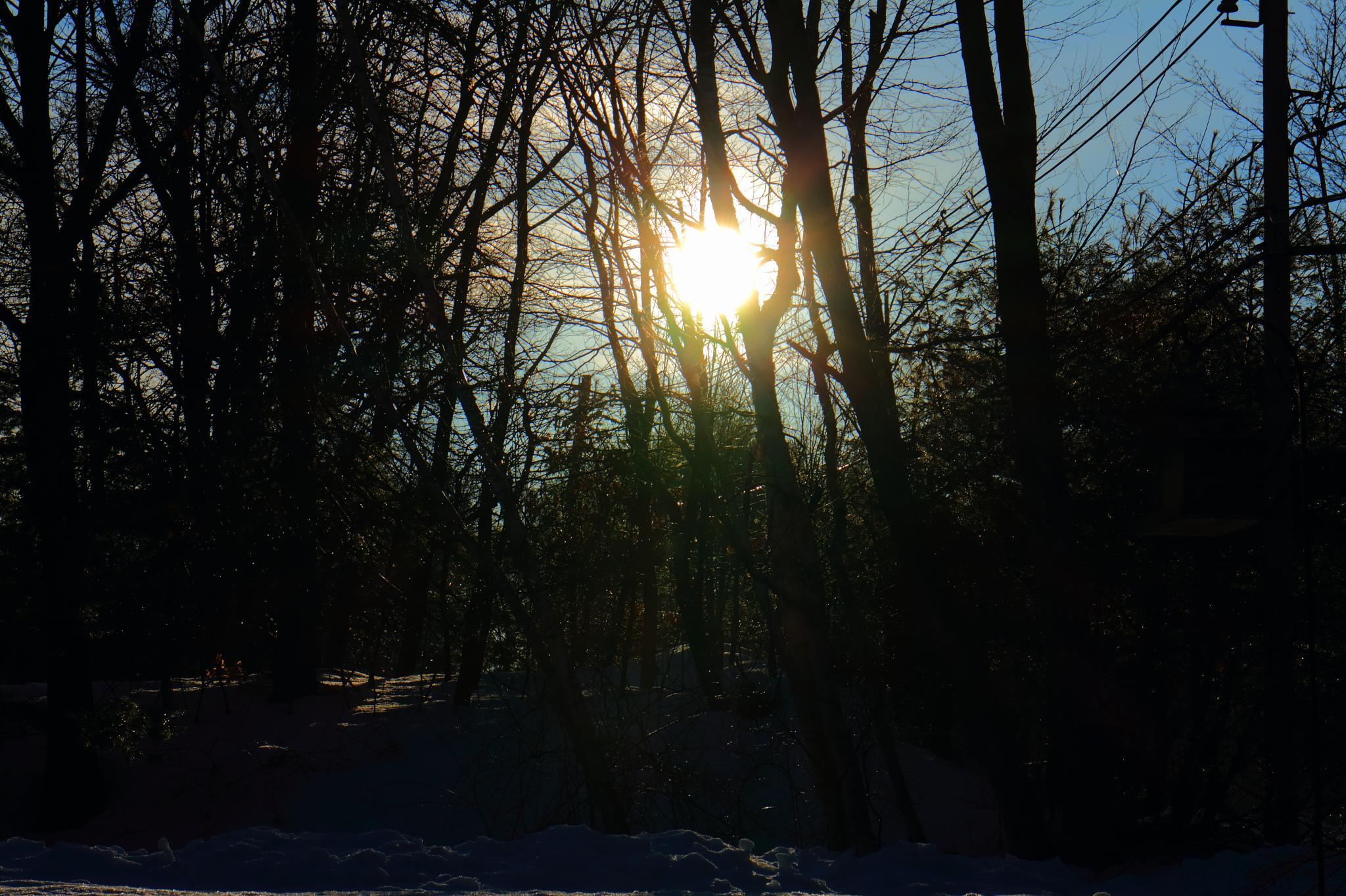 Bright Morning Sun. by Dan Bourque