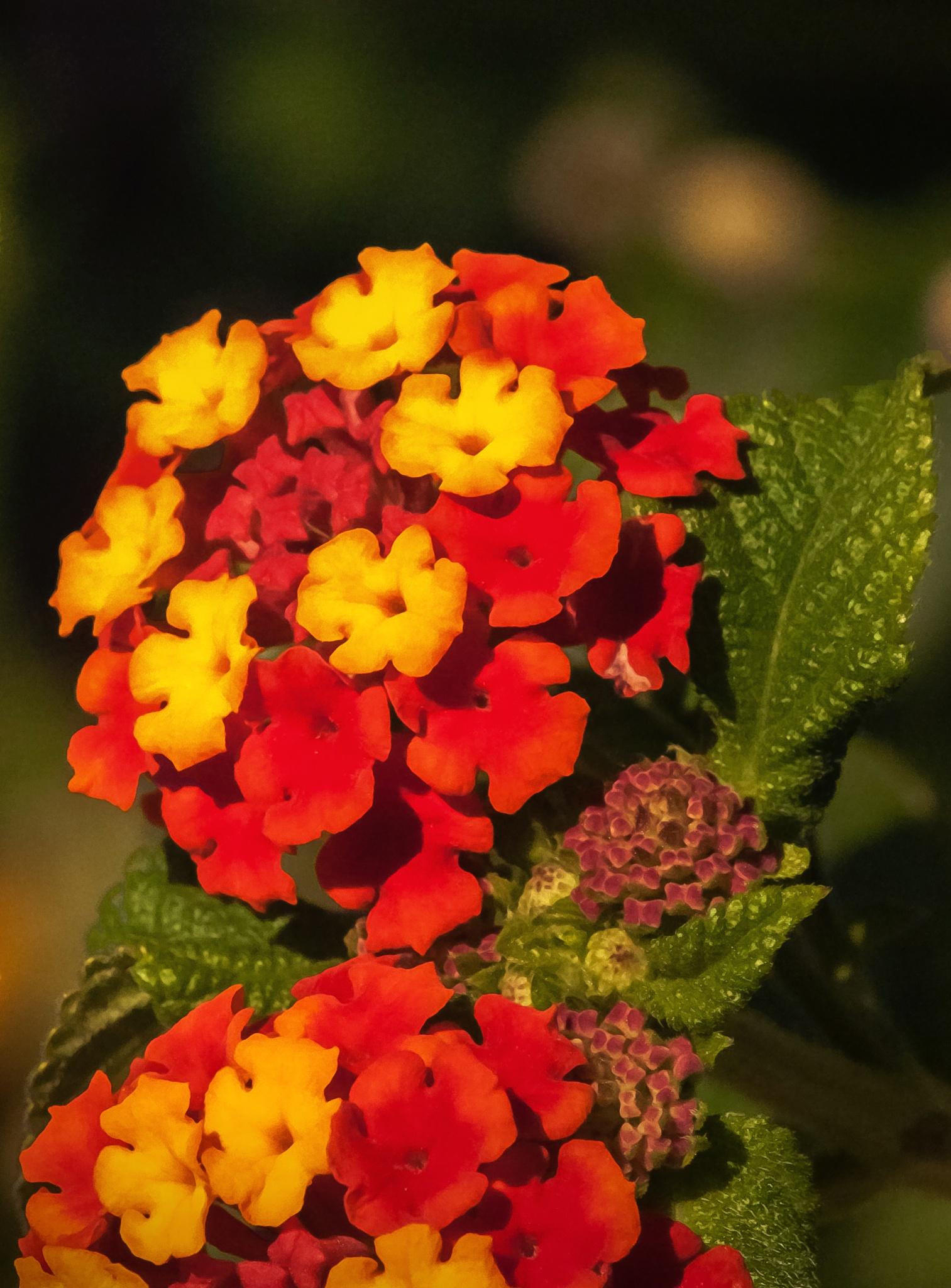 Yellow Flowers by donato rondini