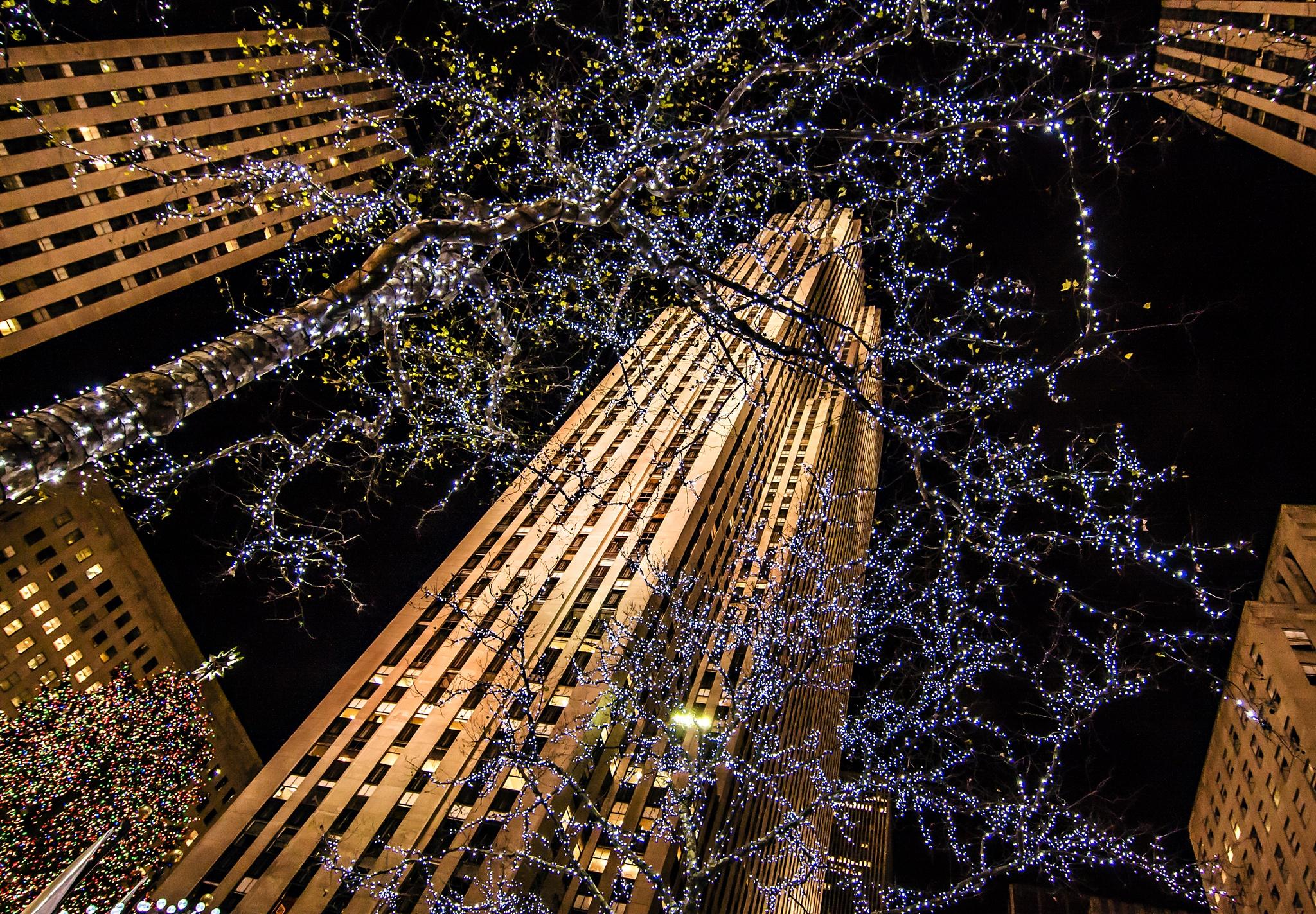 Little Lights by Tim Snyder