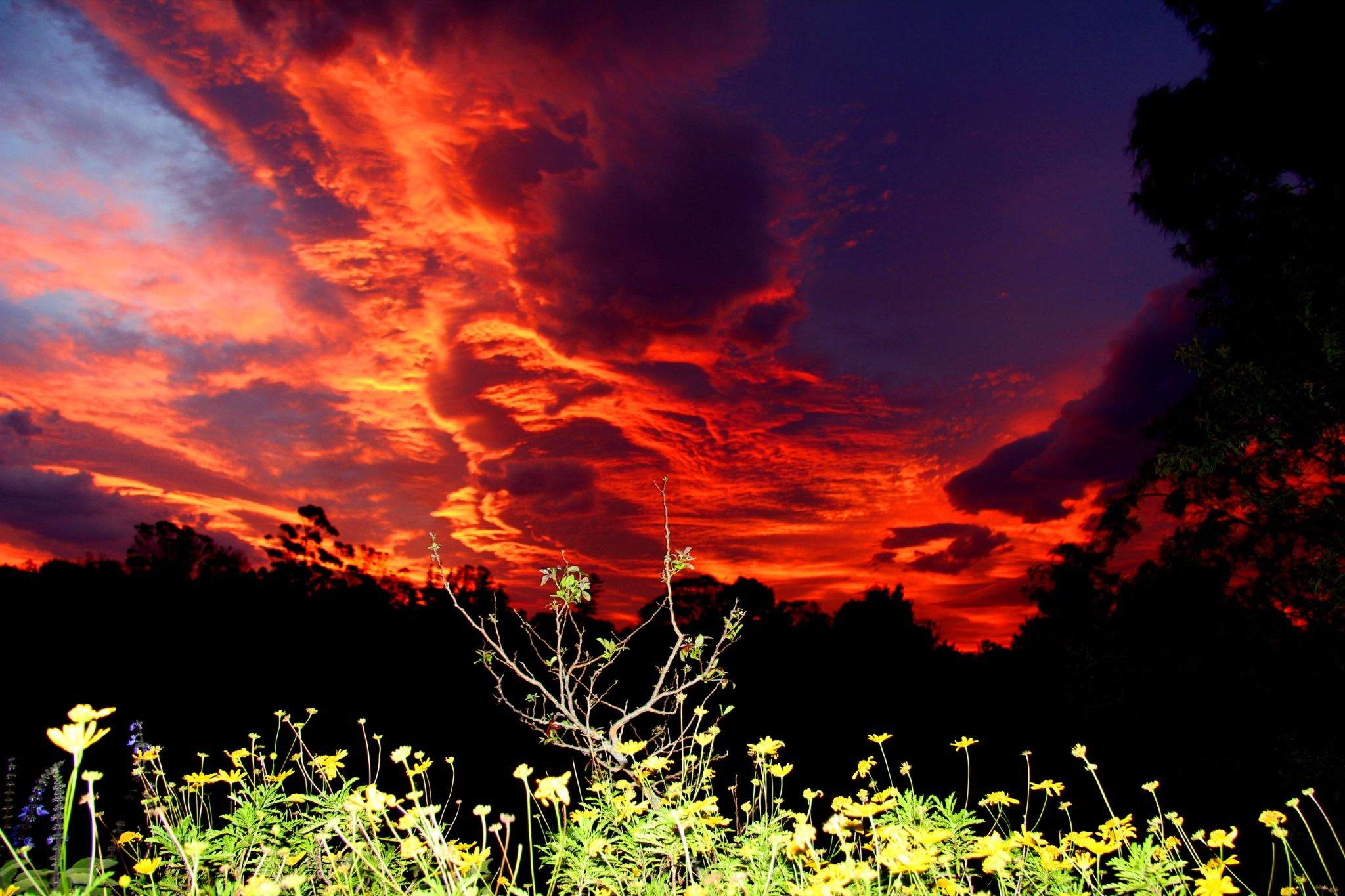 Fire in the Sky by Andrea Paarman