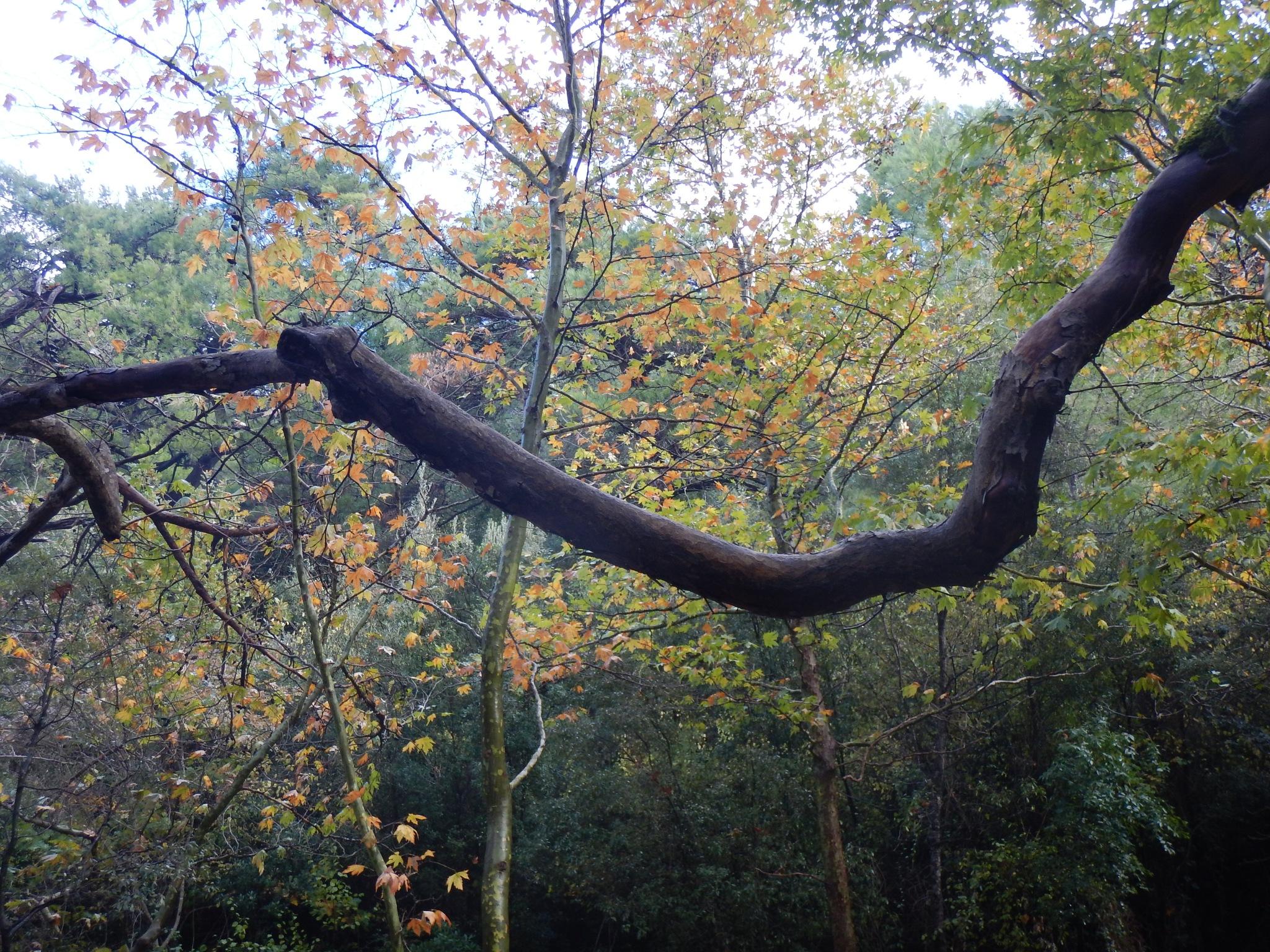 tree by Ruhsar Ünsal