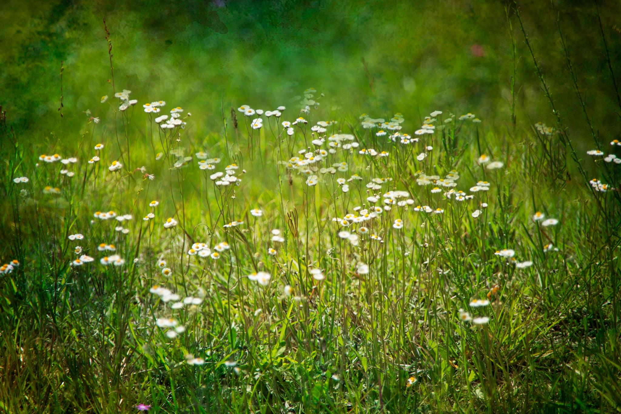 Wild Flowers  by Regina Williams