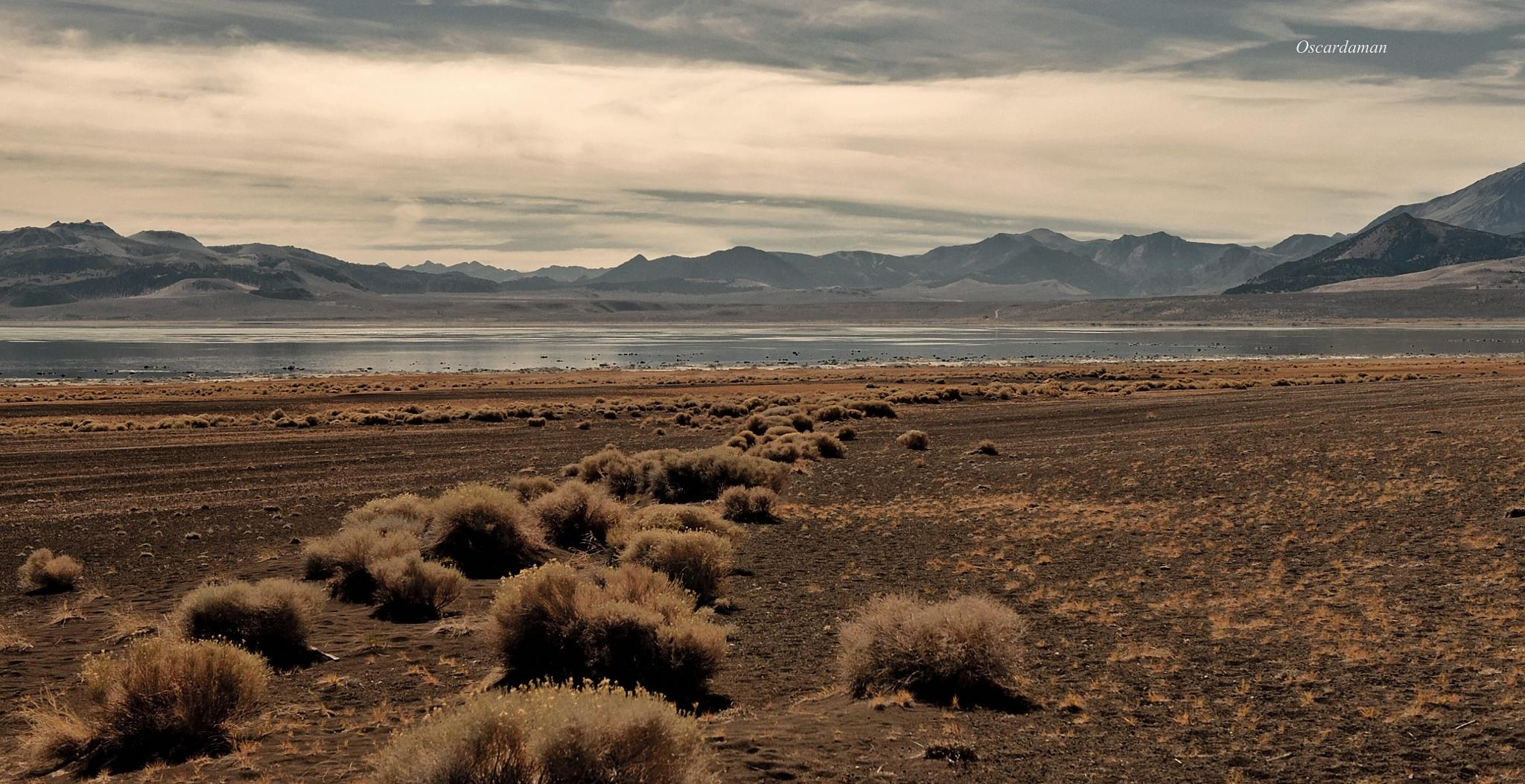 Tumblweeds leading Mono Lake  by Dennis Huey