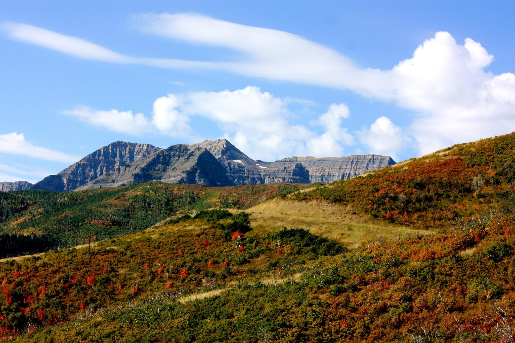 The many faces of Timp by Steven Thomas Densley