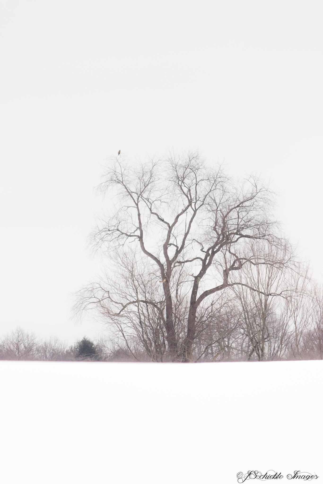 Loneliness  by jennifer.schieble