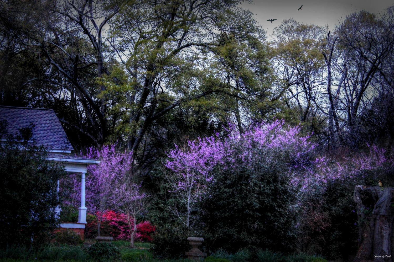 Photo in Landscape #spring #garden #house