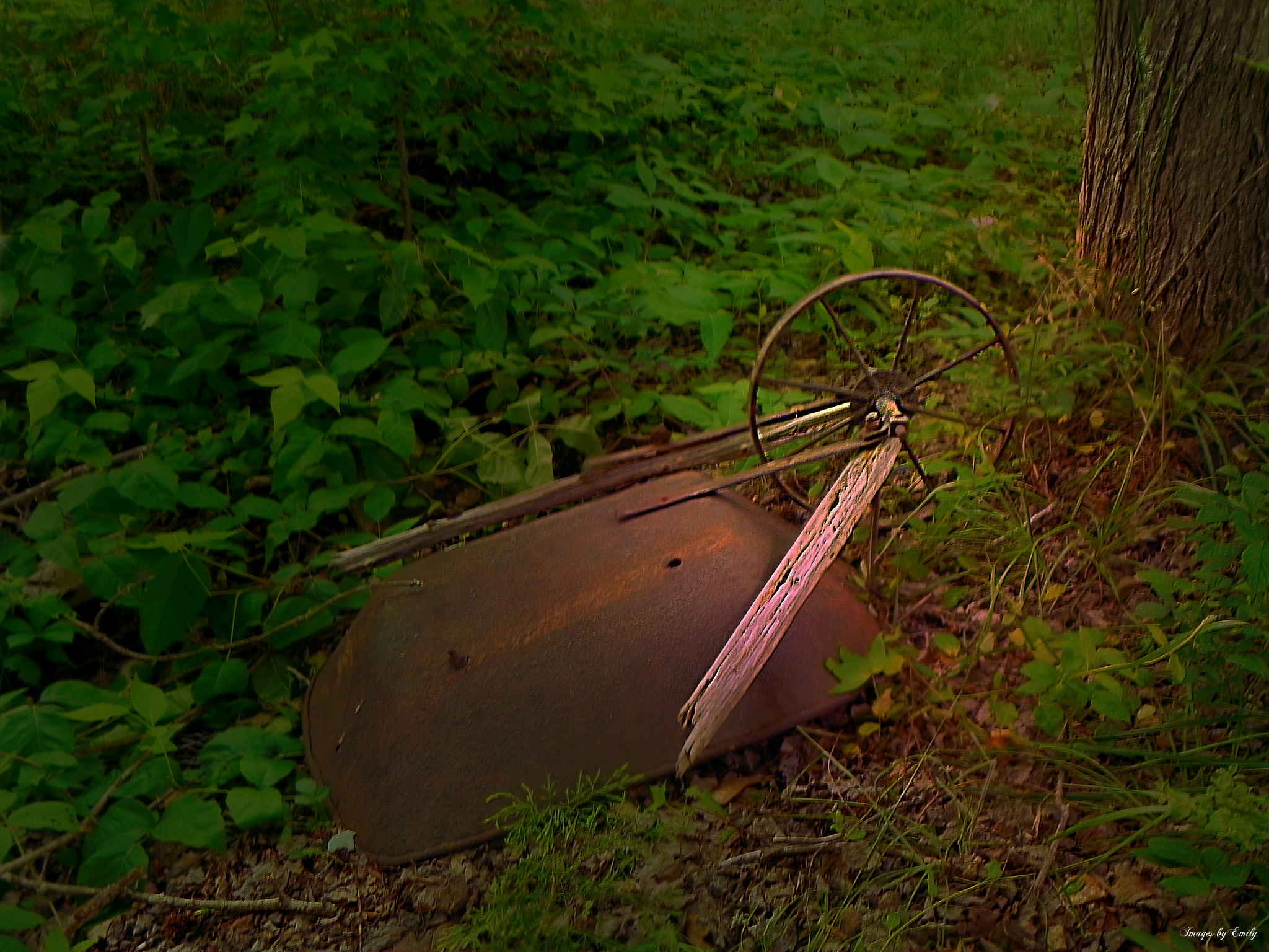 Photo in Landscape #wheel barrow #leaves #broken