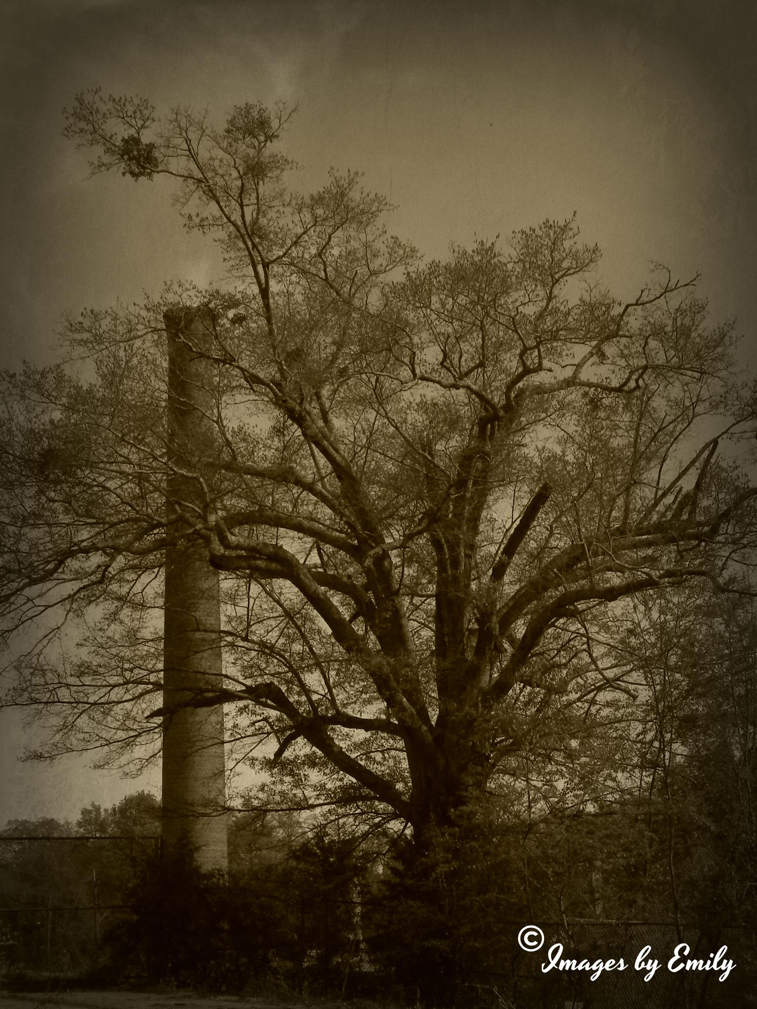 Smoke Stack by Emily Grant