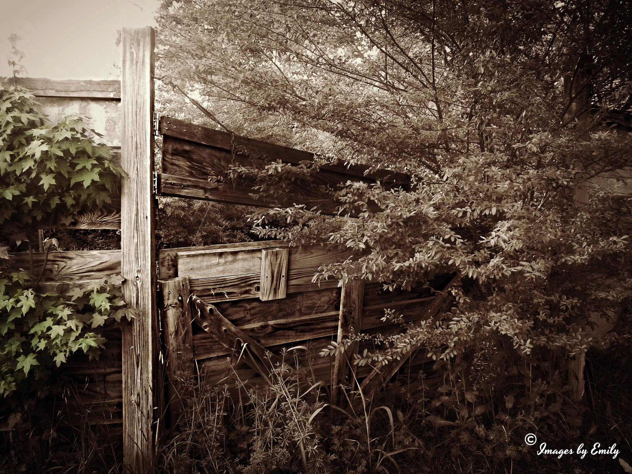 wooden gate by Emily Grant