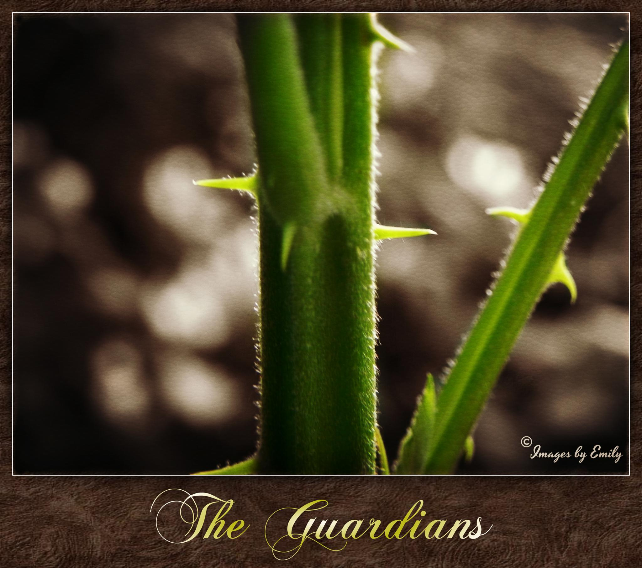 The Guardians by Emily Grant