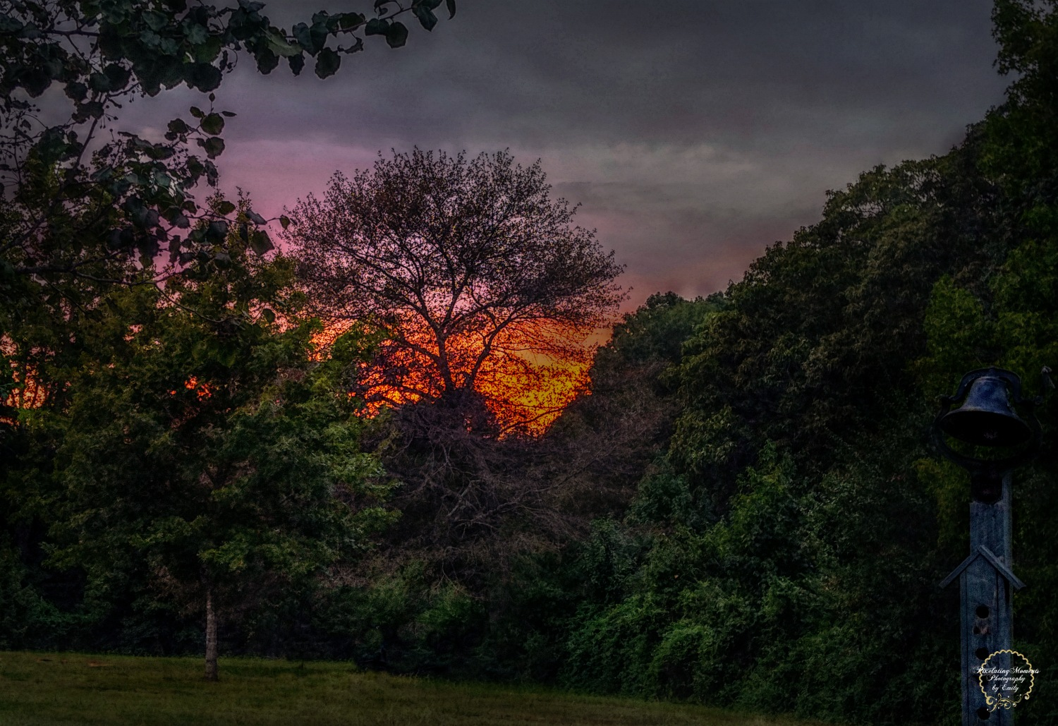 Back Yard Sunset by Emily Grant