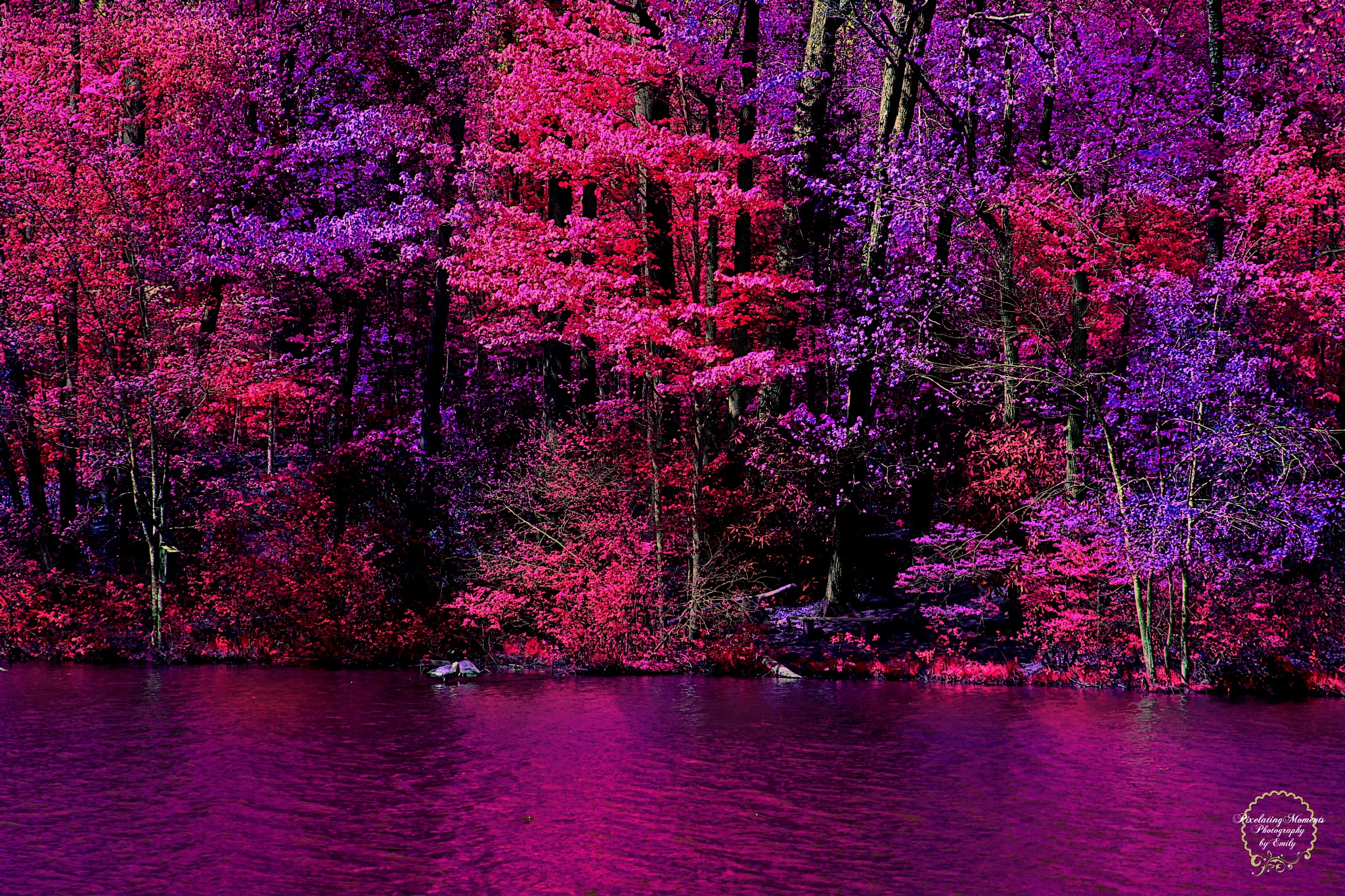 Pink and Purple Dreams by Emily Grant